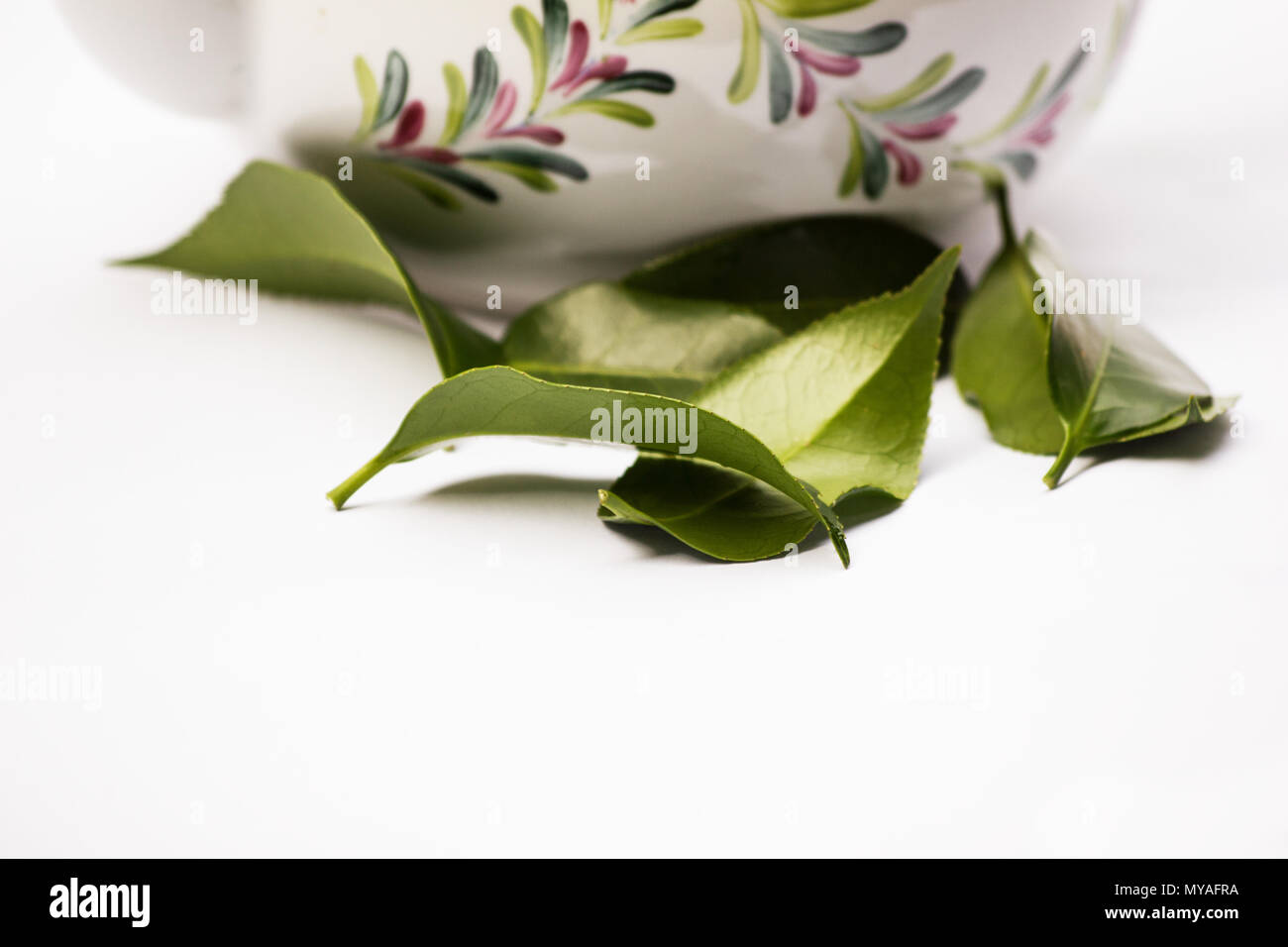 Plant tea leaves and tea pot on white background - Stock Image