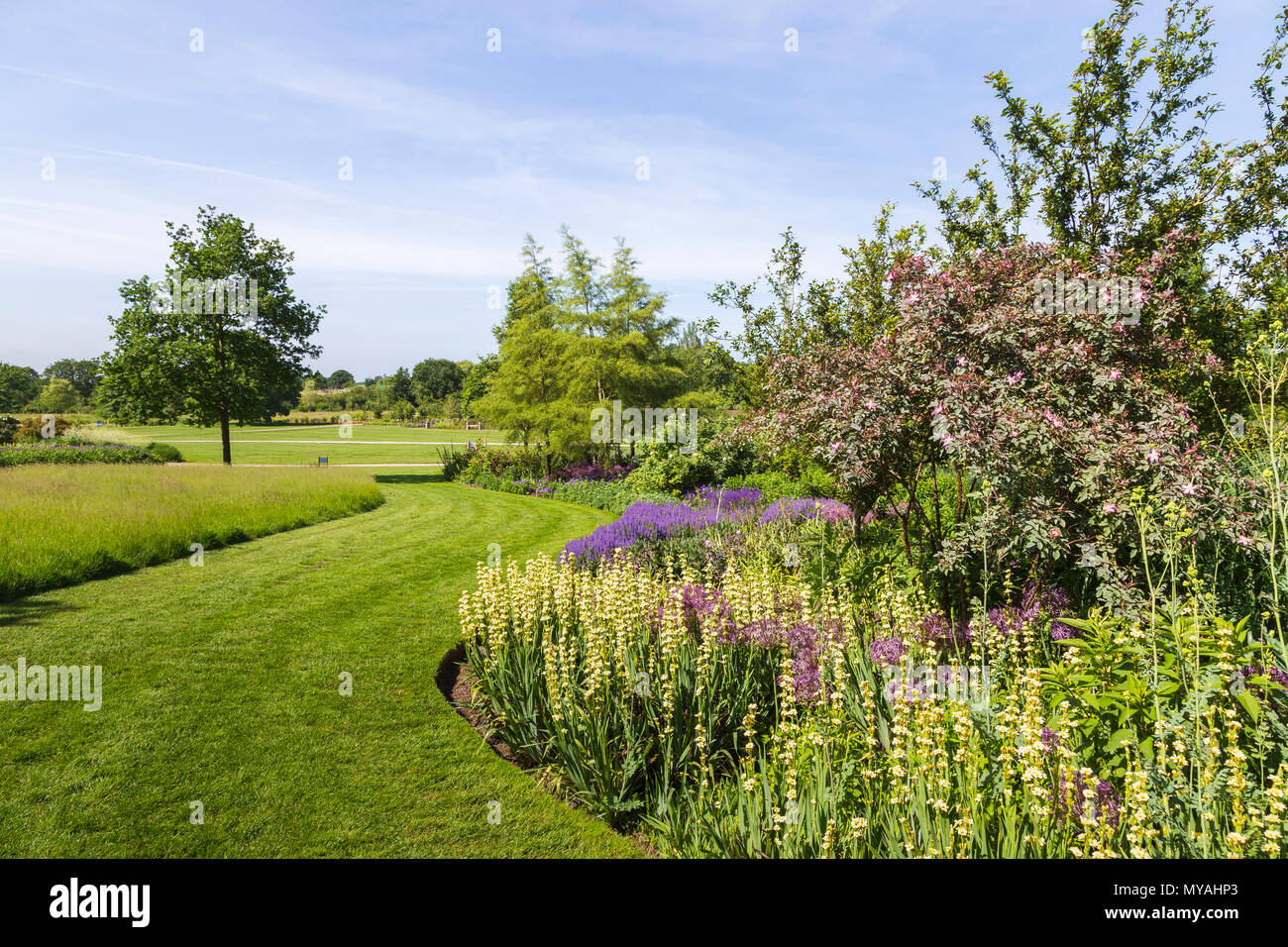 RHS Gardens Hyde Hall in Essex on a Glorious Summer Morning - Stock Image