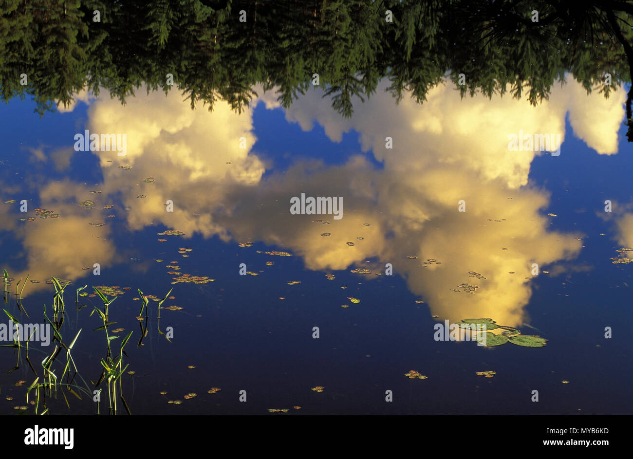Scenic scene with clouds reflected in a lake with water-lilies, Algonquin National Park, Ontario, Canada Stock Photo