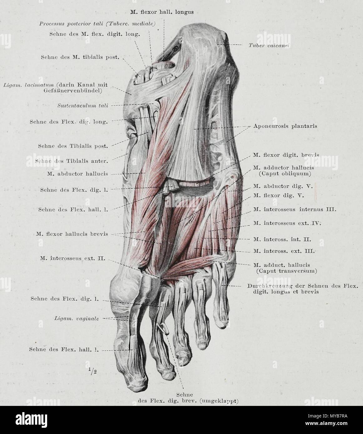Anatomie Stock Photos & Anatomie Stock Images - Page 6 - Alamy
