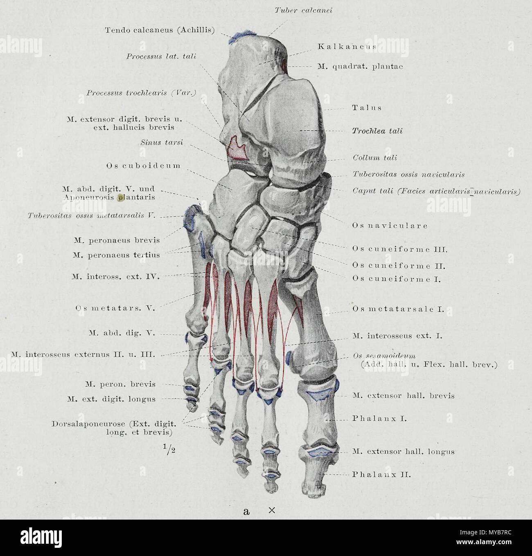 Ziemlich Spirituelle Anatomie Des Menschen Galerie - Anatomie Ideen ...