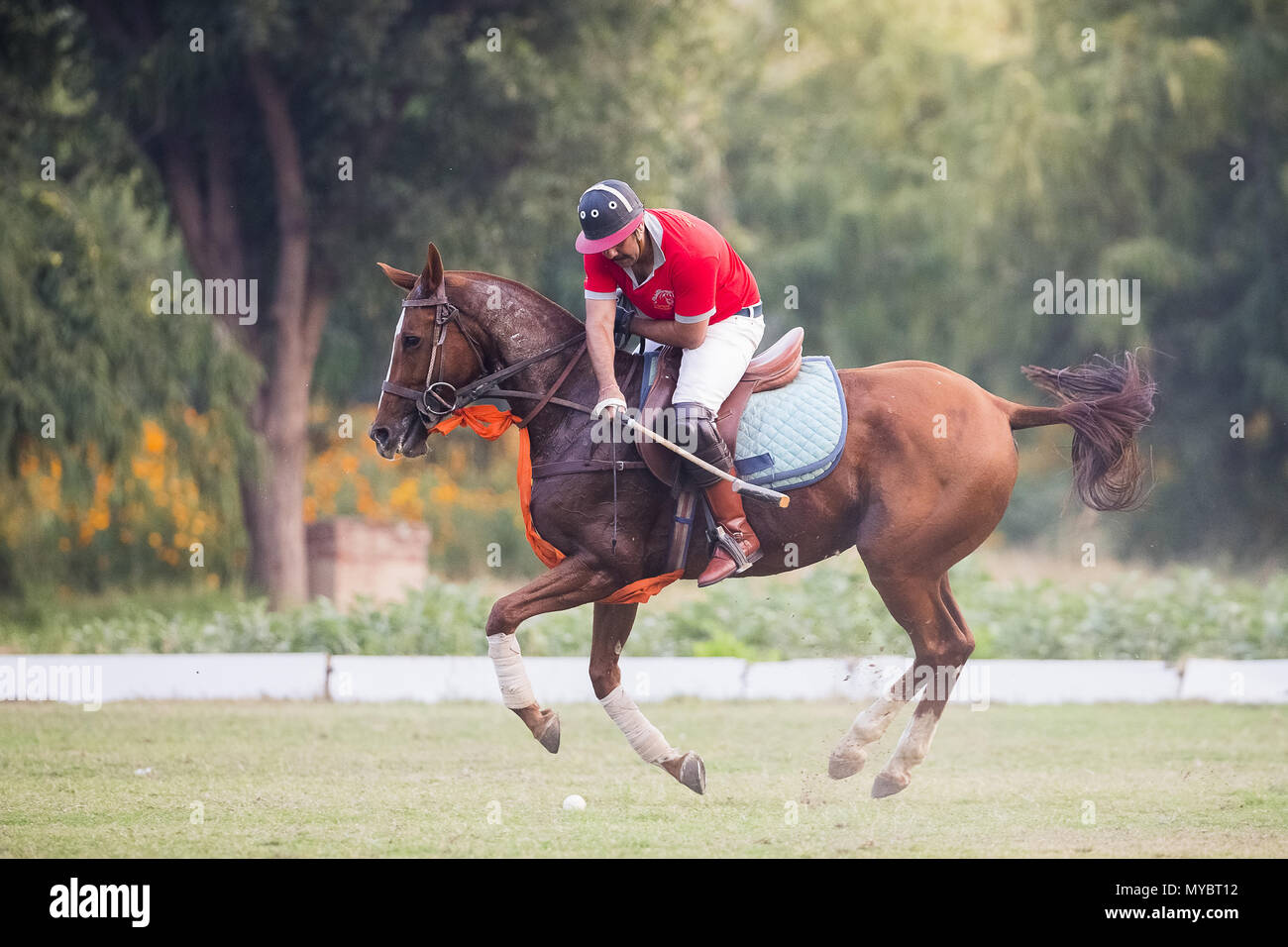 Polo Pony. Player in a polo match. Jaipur, India. - Stock Image