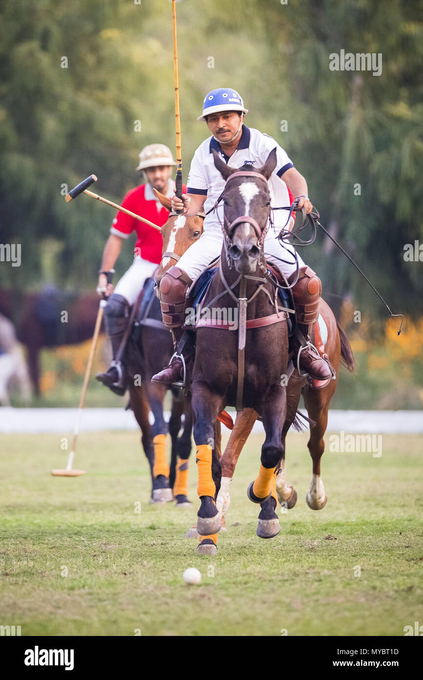 Polo Pony. Players in a polo match. Jaipur, India. - Stock Image