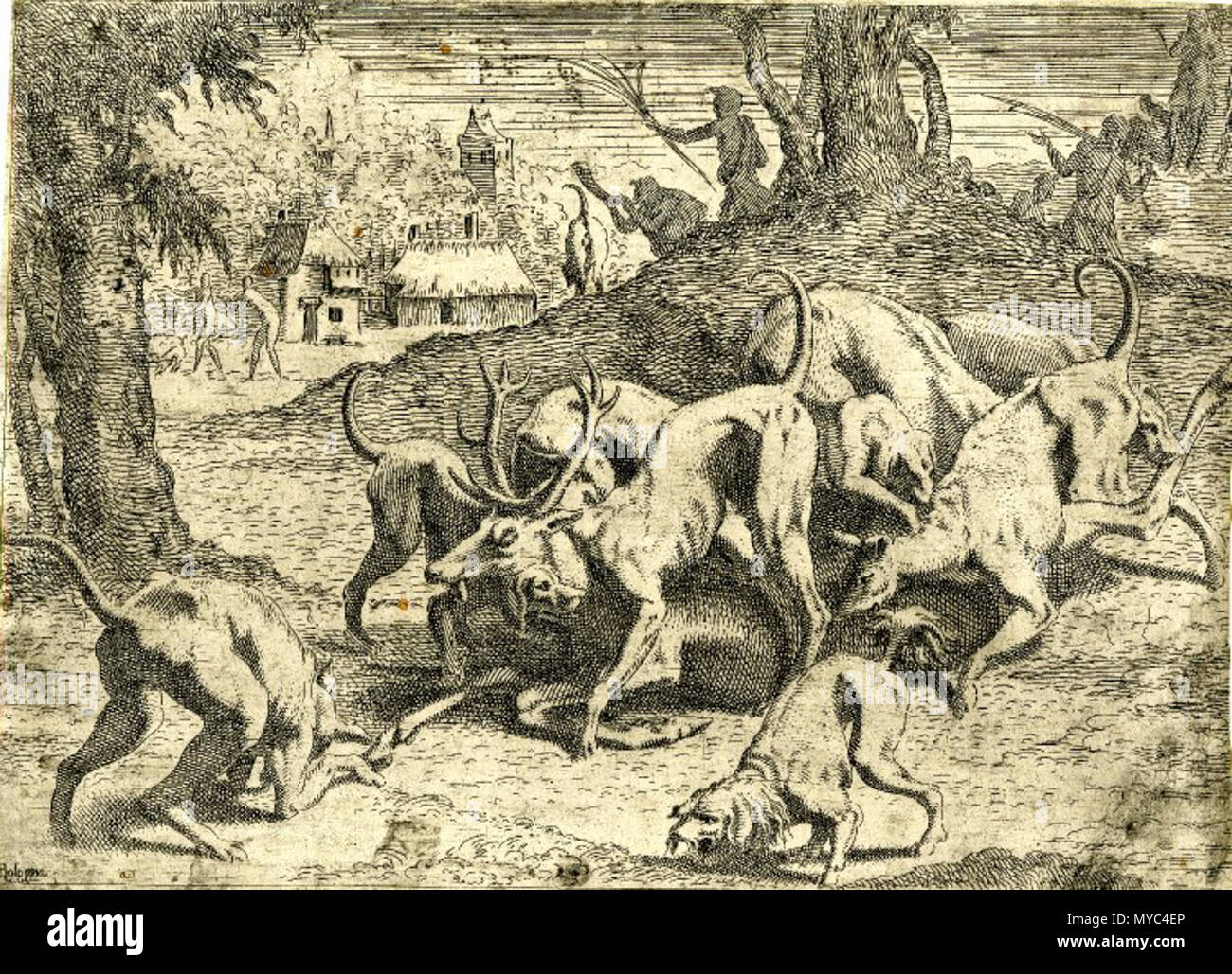 . English: British Museum Pack of hunting dogs attacking a stag, perhaps Actaeon after his metamorphosis; in the background, people in classical costume and houses. c.1545 Etching, Print made by: Léon Davent After: Francesco Primaticcio , 1545 Zerner 1969 LD.38 Bartsch XVI.331.64 . 1540s. Léon Davent - French printmaker in the mid 16th century 133 Davent acteon bm - Stock Image