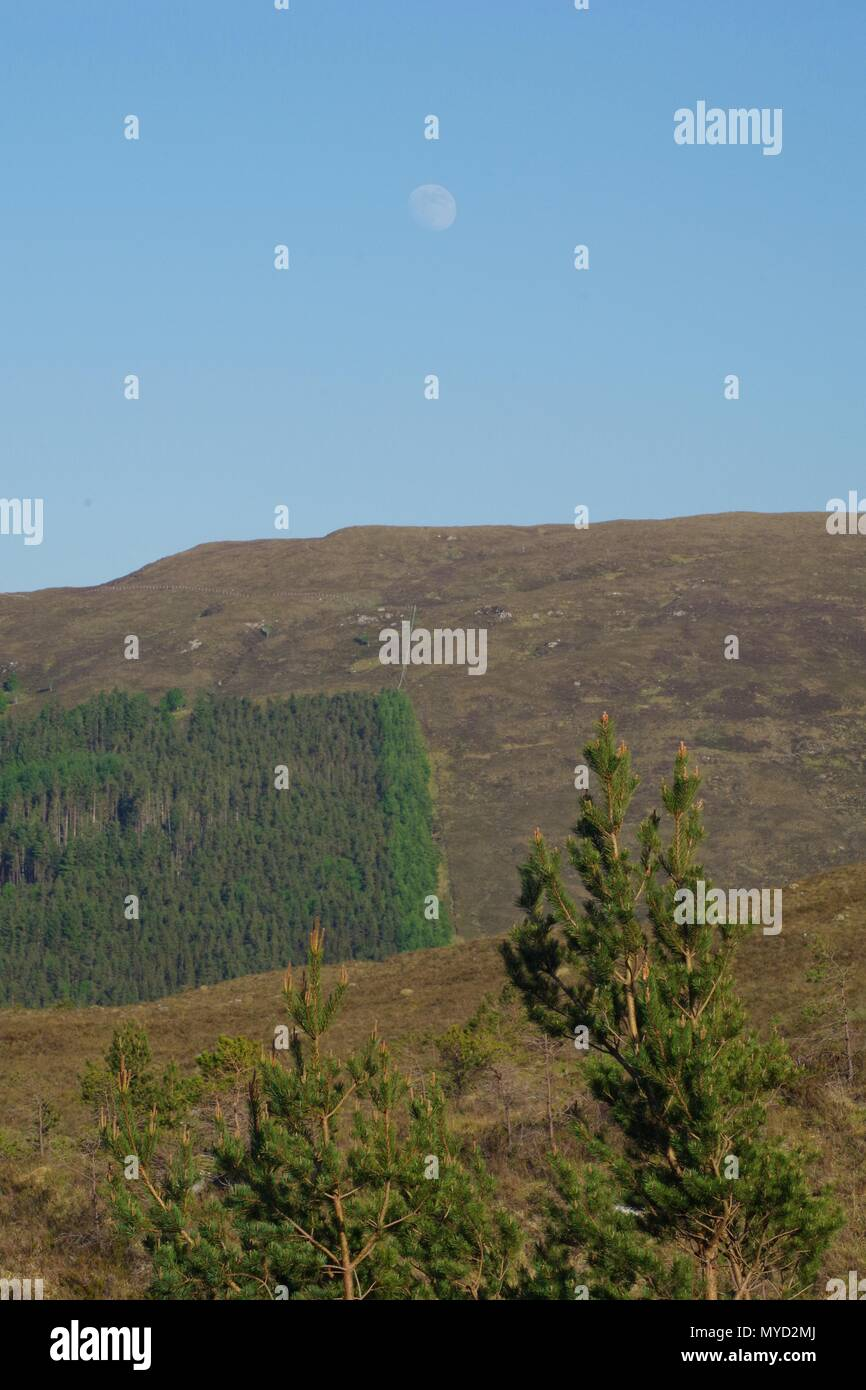 Conifer Plantation on the Hillside by Kinlochewe Village on a Sunny Evening. Beinn Eighe NNR, Scotland, UK. - Stock Image