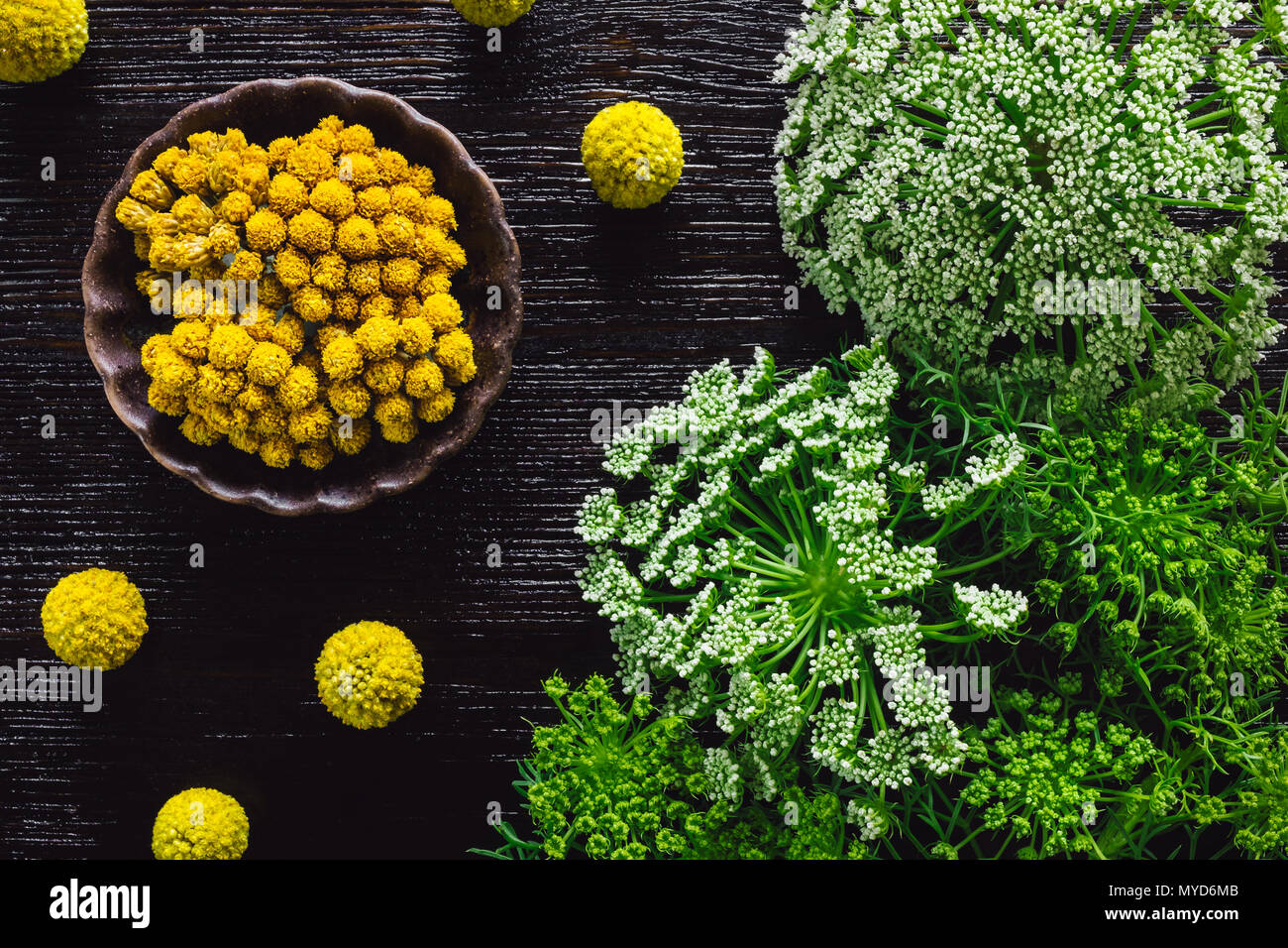 Craspedia and Clustered Everlasting Flowers on Dark Table with Wild Carrot - Stock Image