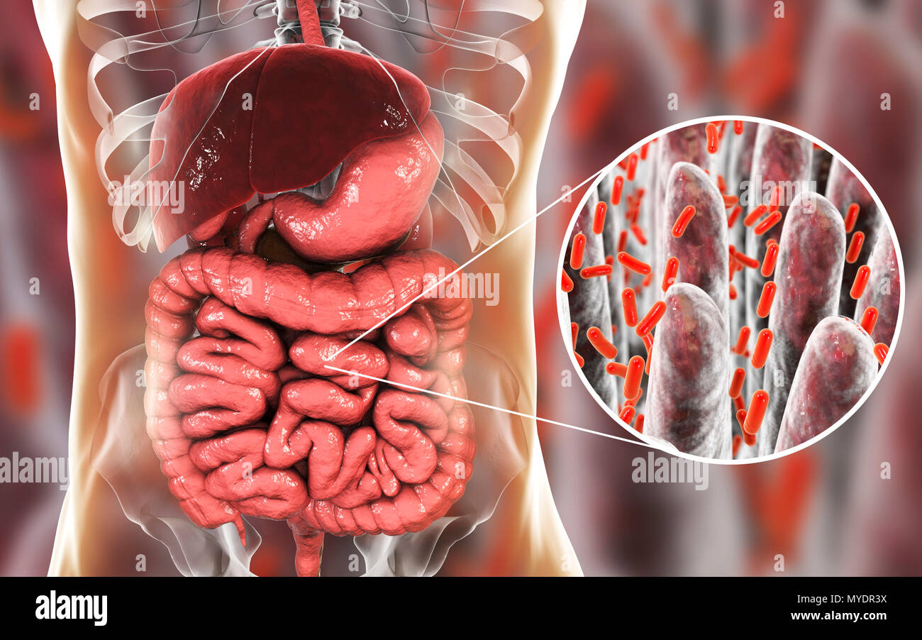 Computer Illustration Of The Human Digestive System And A Close Up