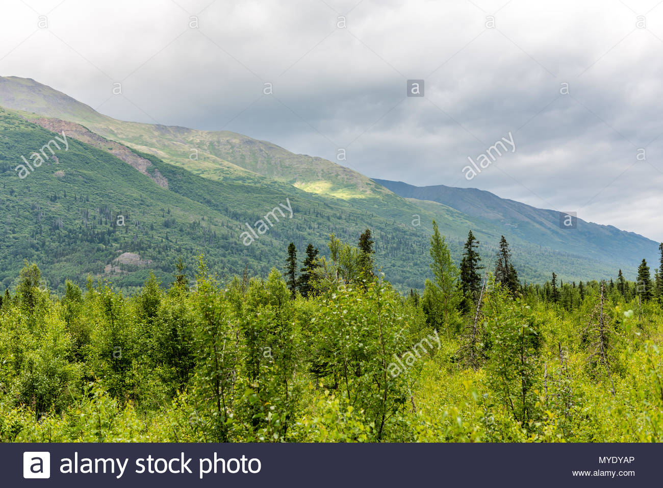 The Chugach Mountains Along the Eagle River near Anchorage, Alaska - Stock Image