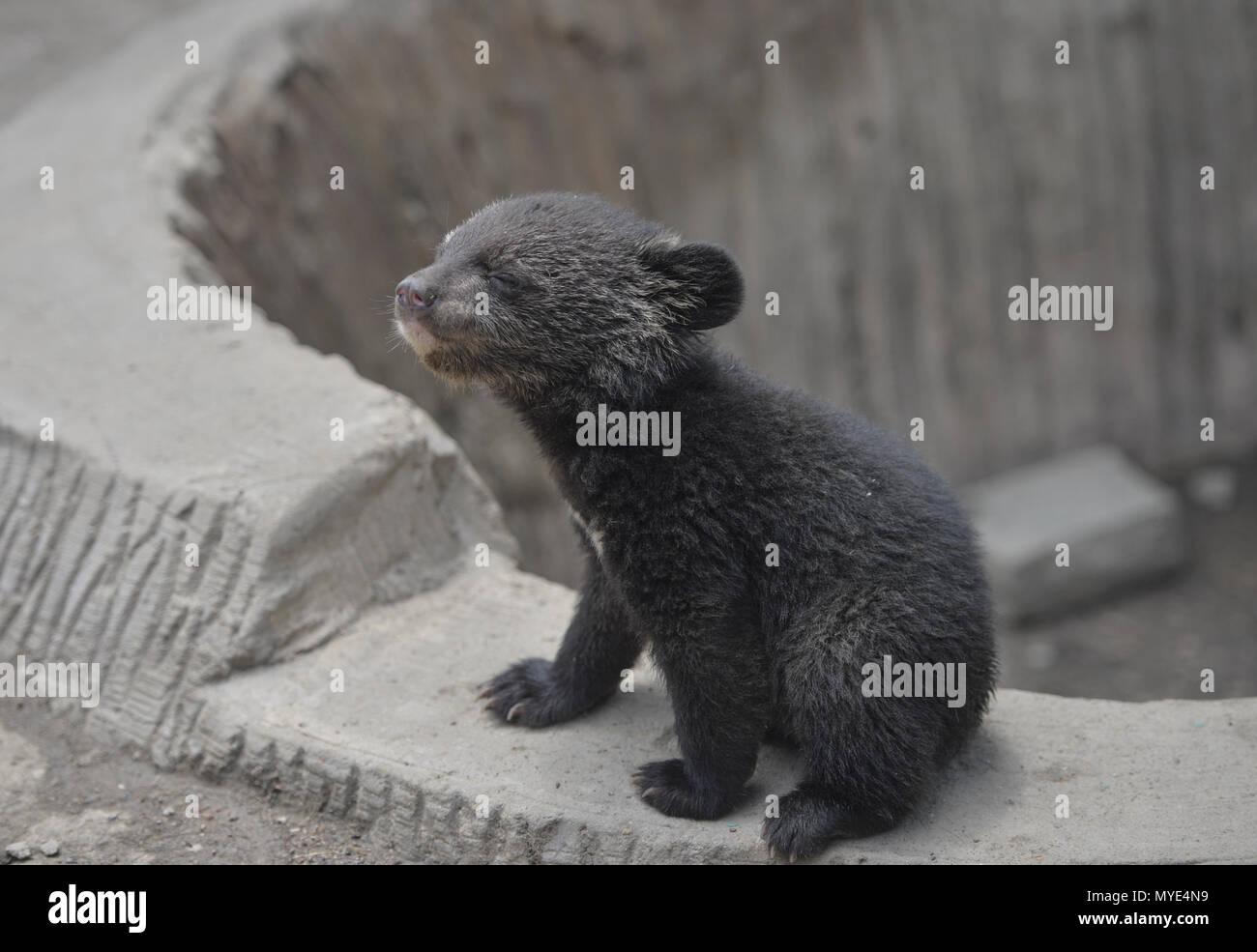 Shenyan, Shenyan, China. 7th June, 2018. Shenyang, CHINA-7th June ...