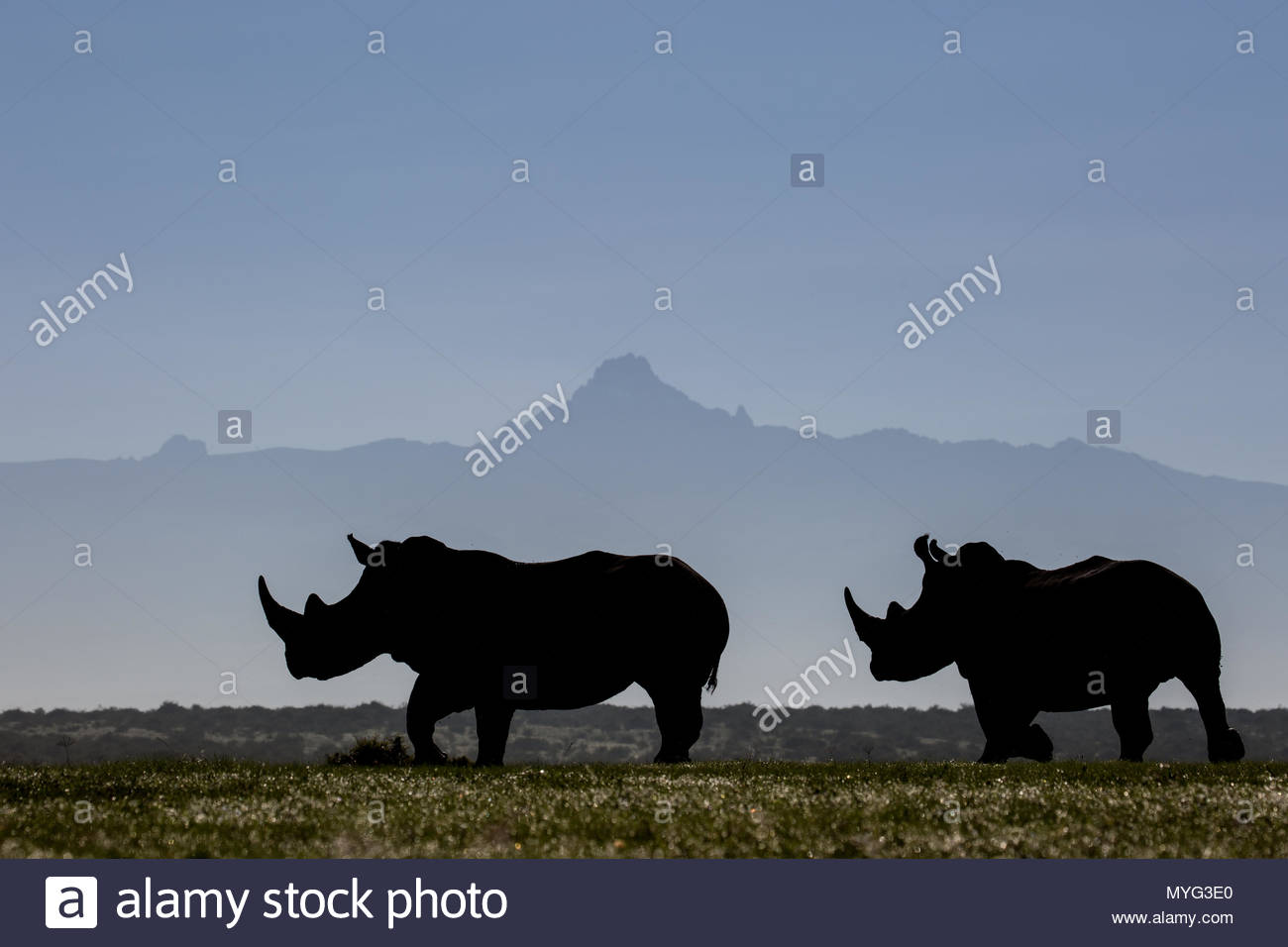Two white rhinos silhouetted against the outline of Mount Kenya on a clear morning. - Stock Image