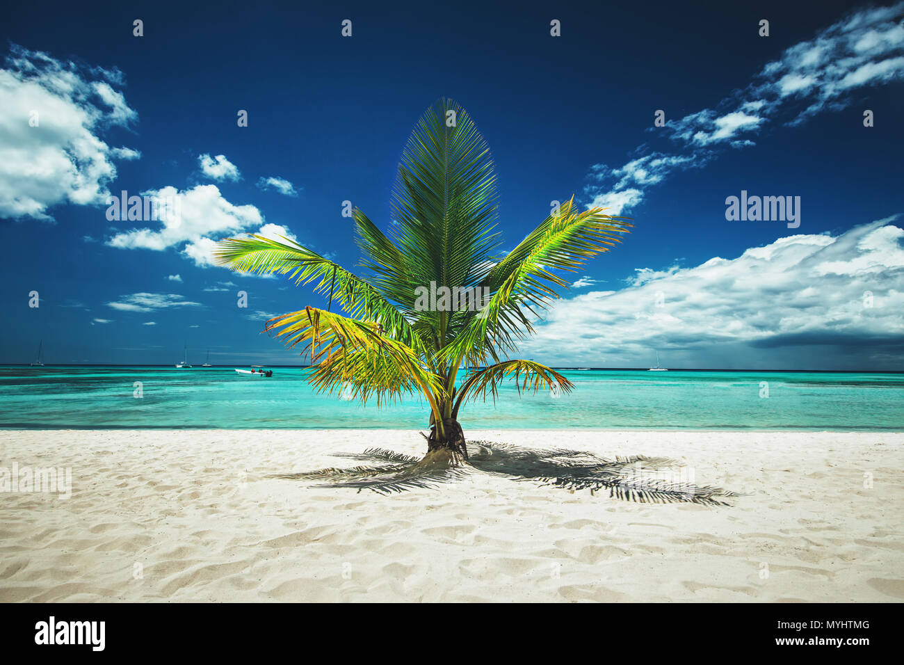 Palm and tropical beach - Stock Image