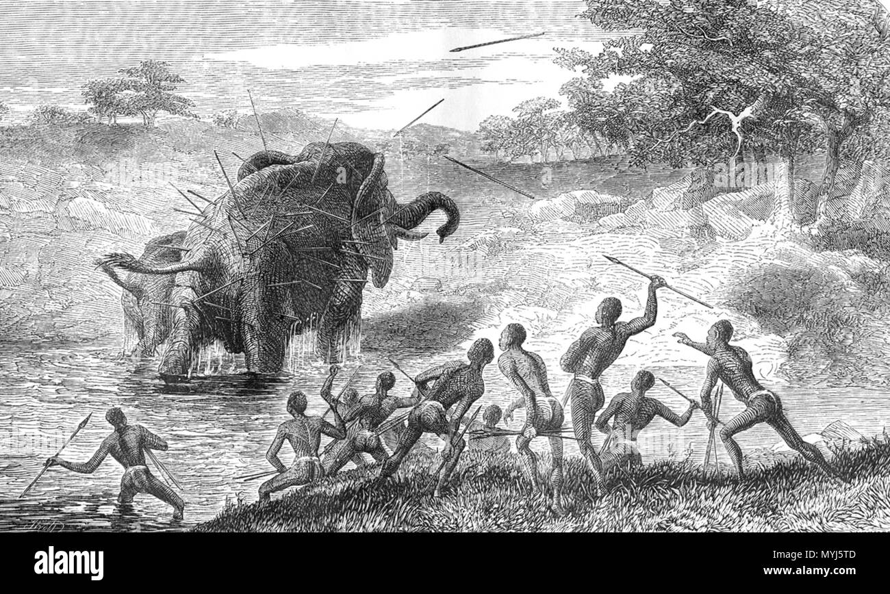 . English: Female Elephant Pursued with Javelins, Protecting Her Young. 'She often stood after she had crossed a rivulet, and faced the men, though she received fresh spears. It was by this process of spearing and loss of blood that she was killed, for at last, making a short charge, she staggered round and sank down dead in a kneeling posture. I did not see the whole hunt, having been tempted away by both sun and moon appearing unclouded. I turned away from the spectacle of the destruction of noble animals, which might be made so useful in Africa, with a feeling of sickness, and it was not re - Stock Image