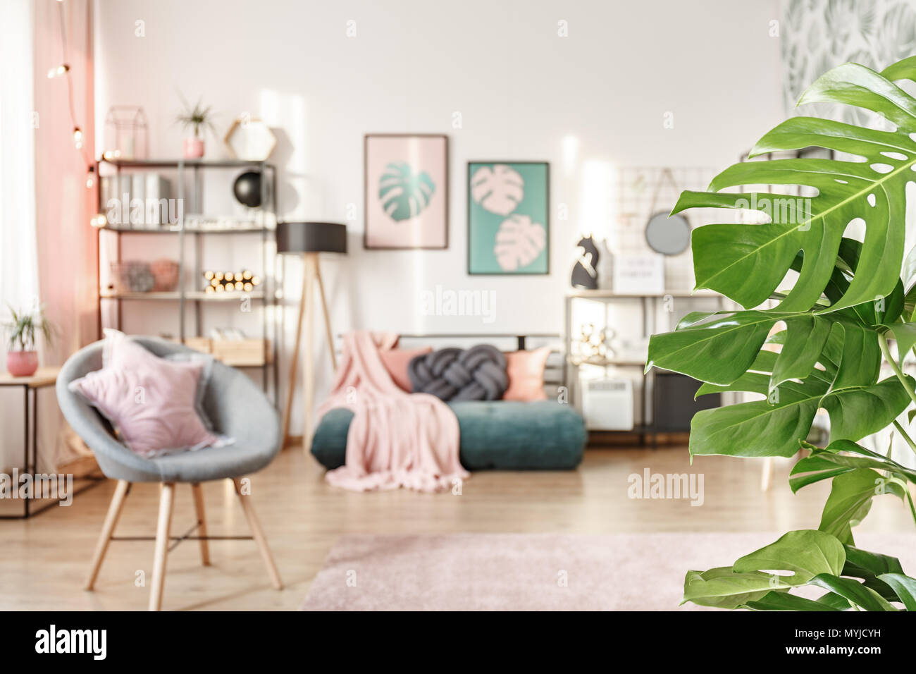 Close-up of green leaves in girl\'s bedroom interior with ...
