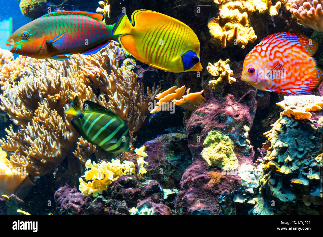 Unterwasserlandschaft im Meer mit exotische Fische und Korallenriffe. Stock Photo