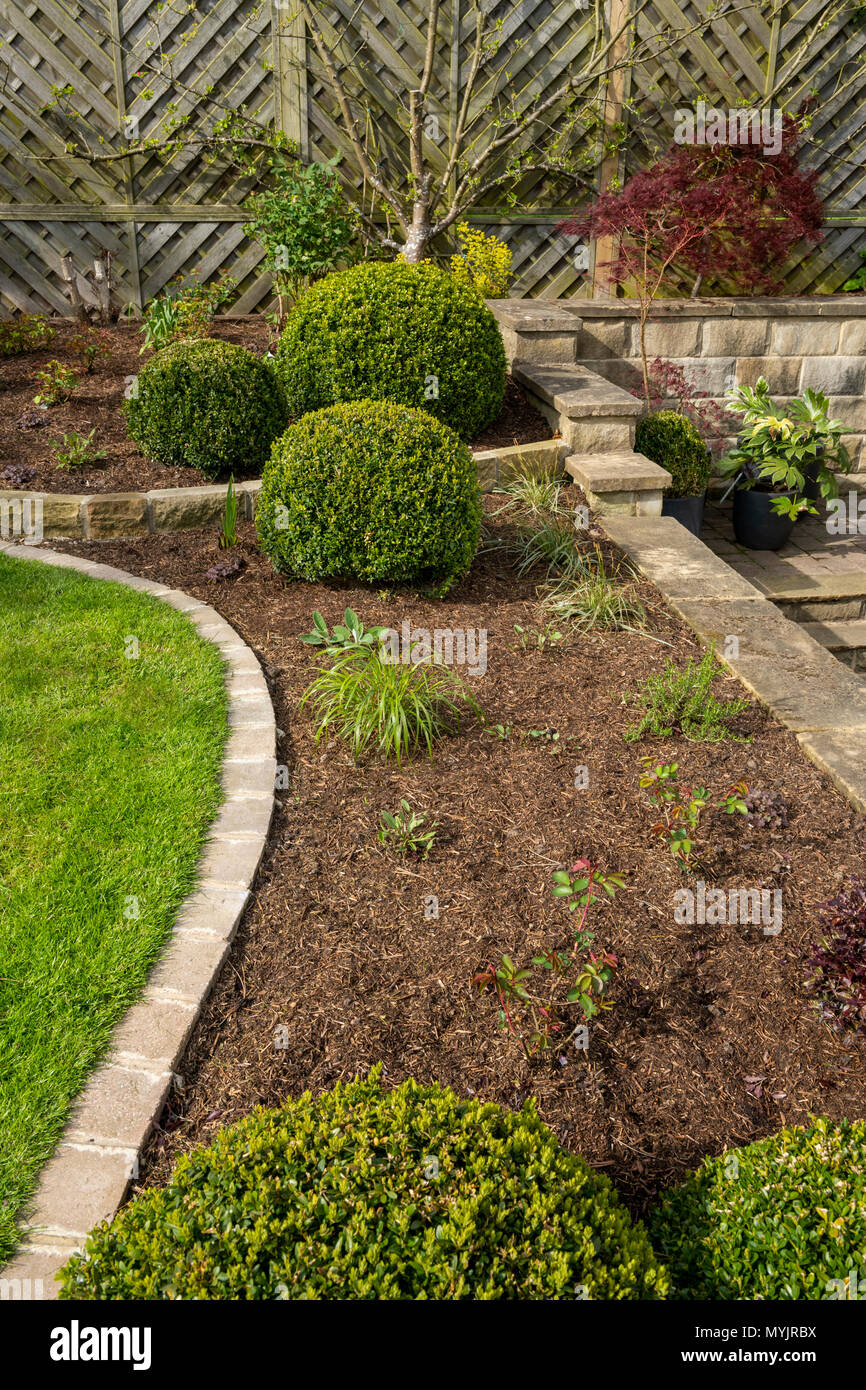 Beautiful, landscaped, private garden close-up with contemporary design, border plants, shrubs, box balls, terracing & lawn - Yorkshire, England, UK. - Stock Image