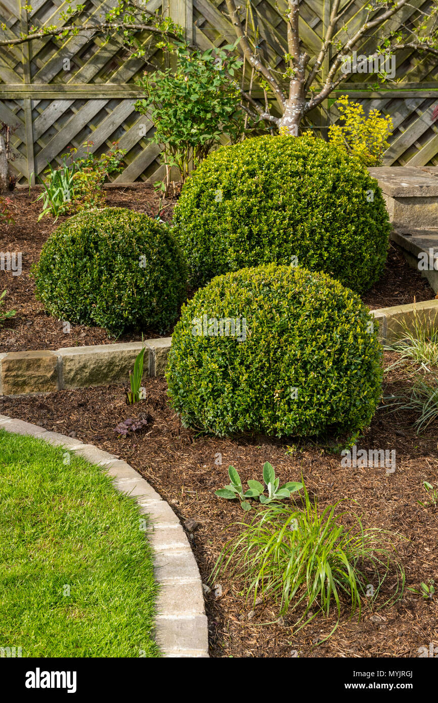 Beautiful, landscaped, private garden close-up with contemporary design, border plants, shrubs, box balls, neat lawn & edges - Yorkshire, England, UK - Stock Image