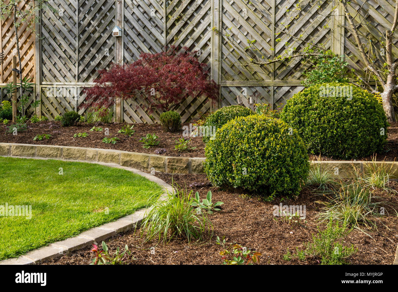 Beautiful, landscaped, private garden close-up with contemporary design, border plants, shrubs, box balls, acer & neat lawn - Yorkshire, England, UK. - Stock Image
