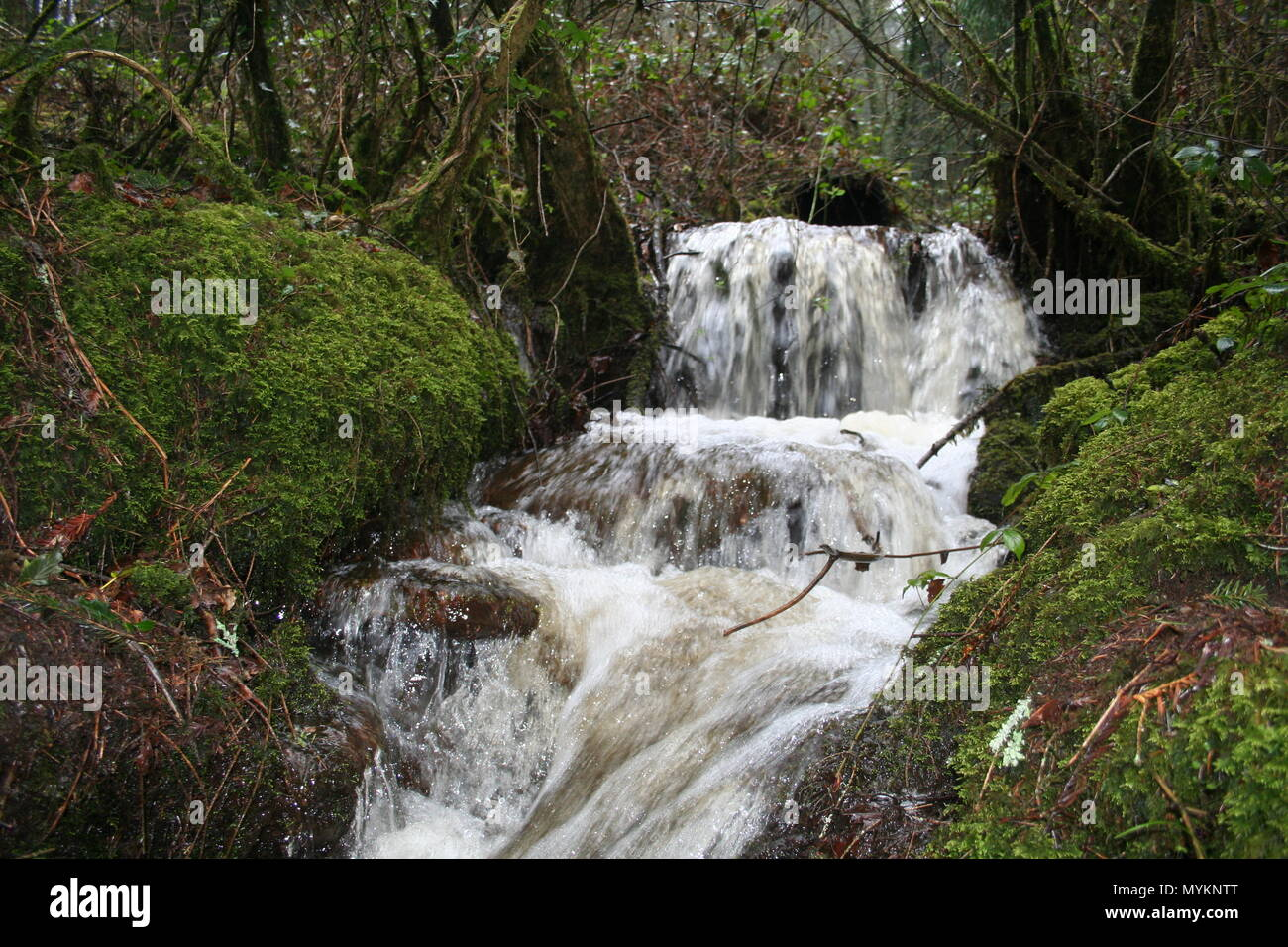 Waterfall in woodlands on the Brecon beacons national park, - Stock Image