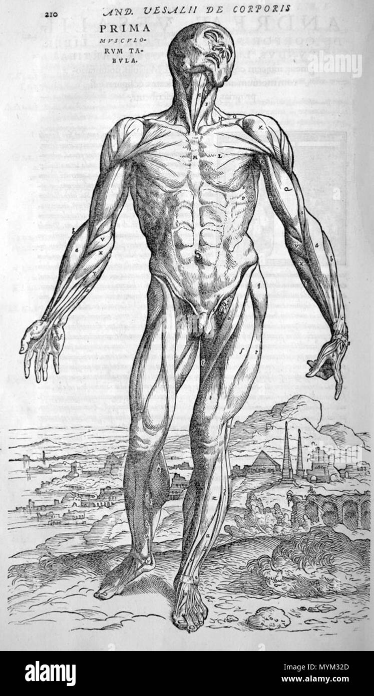 Andreas Vesalius Black And White Stock Photos Images Alamy