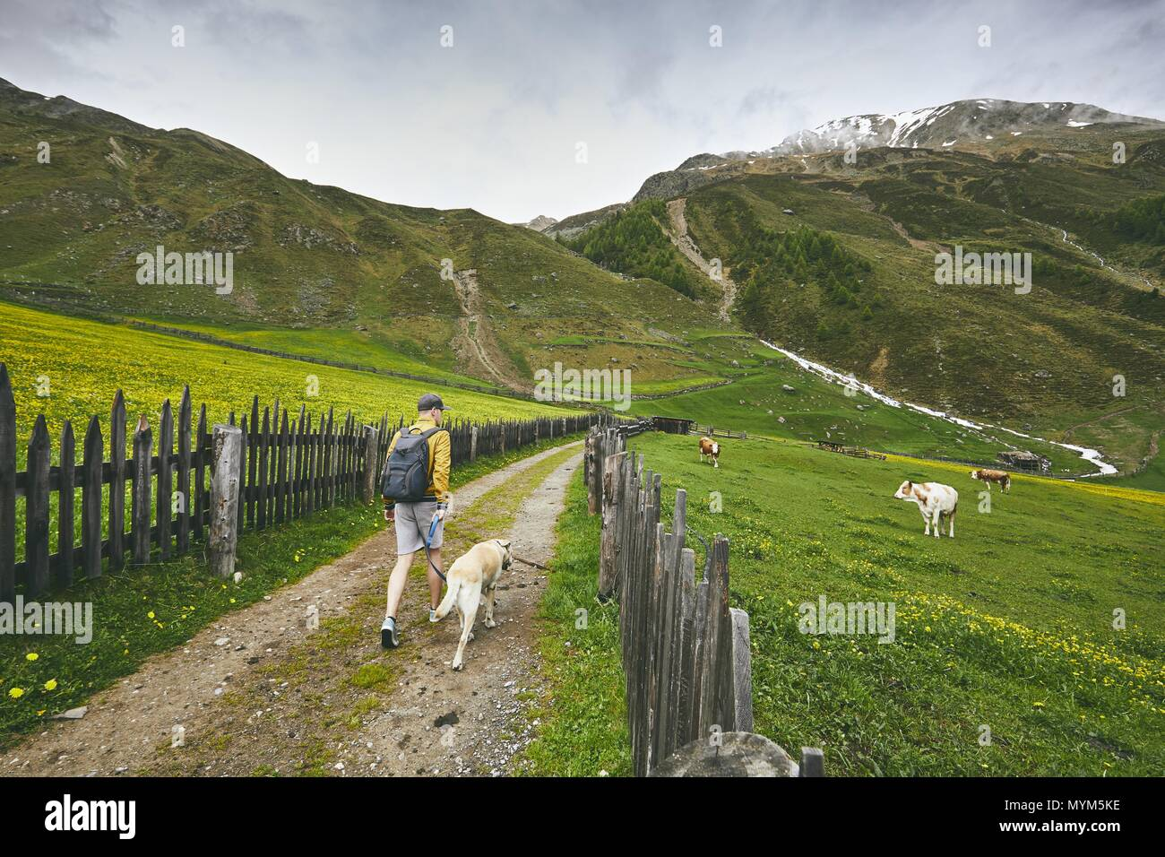 Tourist with dog in countryside. Young man walking with labrador retriever on dirt road. South Tyrol, Italy - Stock Image