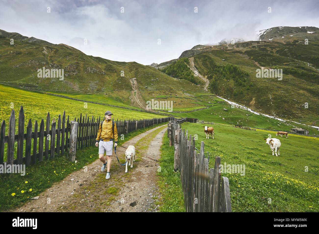 Tourist with dog in countryside. Young man walking with labrador retriever on dirt road. South Tyrol, Italy Stock Photo