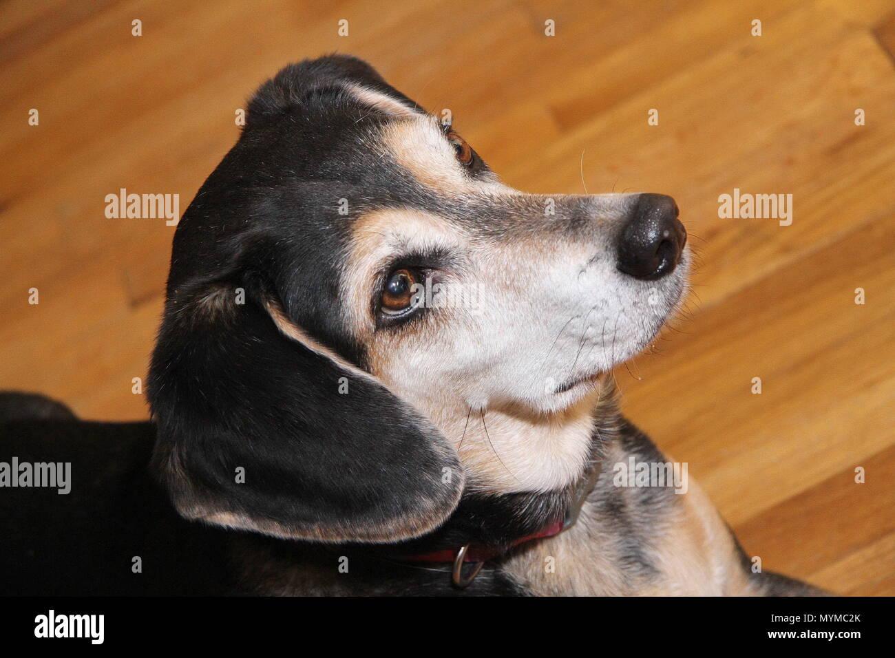 Sweet Lady Dog - Stock Image