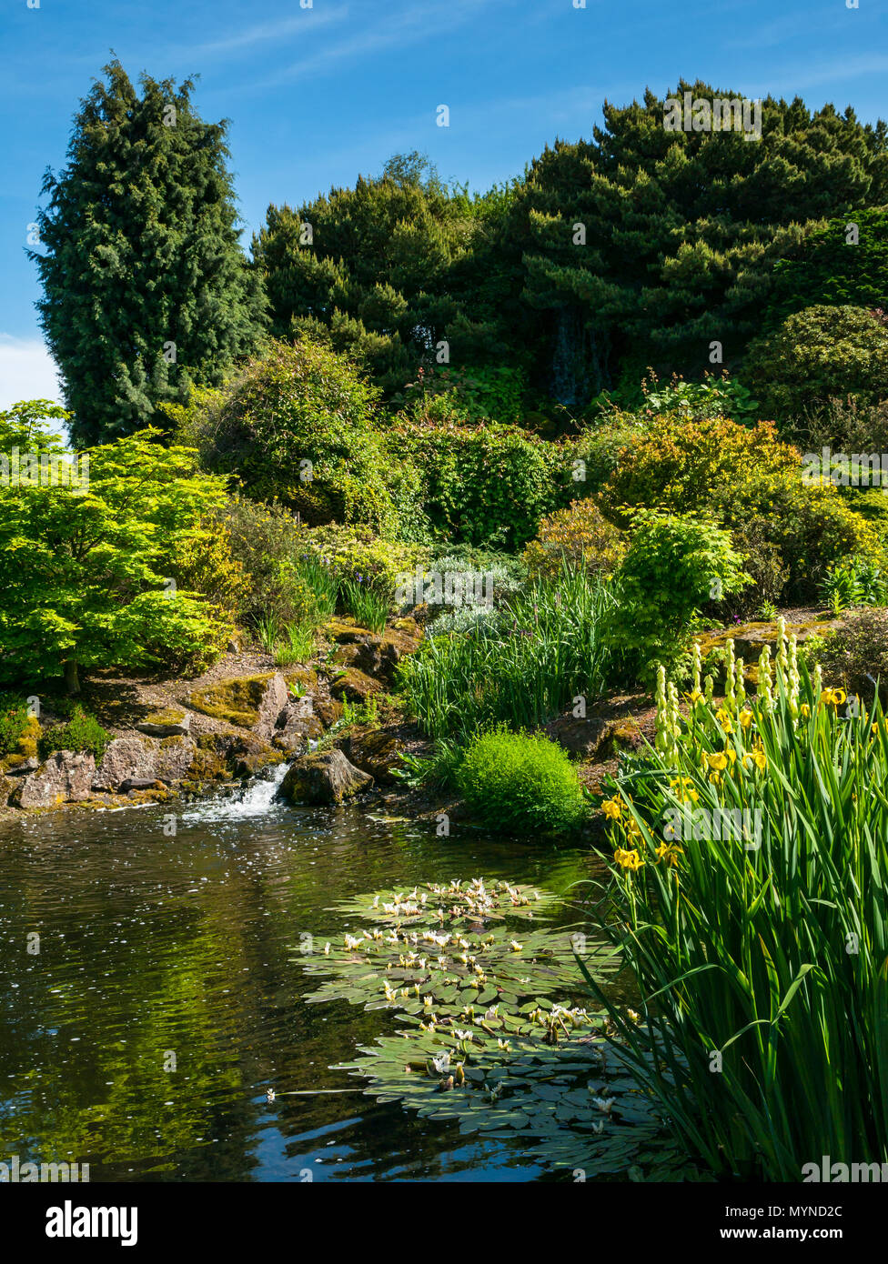 The rock garden on sunny day with blue sky, Royal Botanic garden, Edinburgh, Scotland, UK - Stock Image