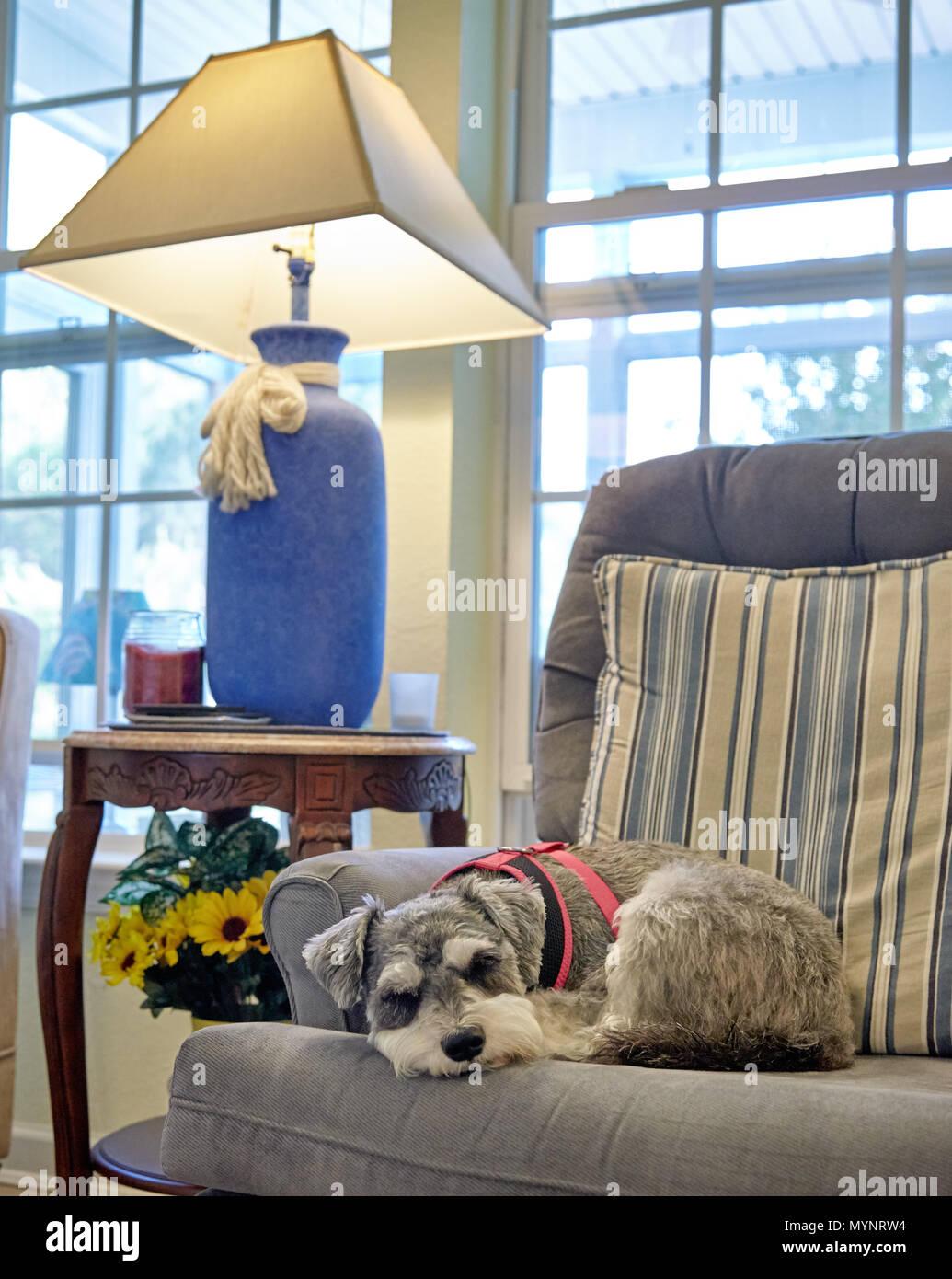 Dog sleeping on chair - Stock Image
