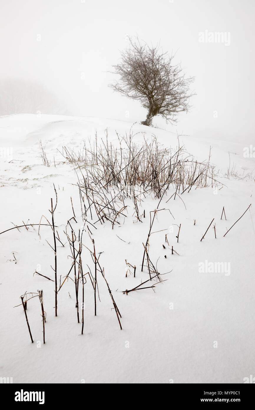 Monochrome winter landscape of windswept bush and foliage poking through snow, Chipping Campden, Cotswolds, Gloucestershire, England, United Kingdom - Stock Image