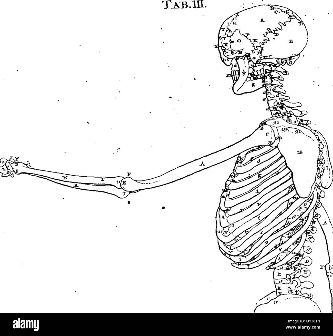 English: Fleuron from book: Anatomia Britannica: a system of anatomy ...