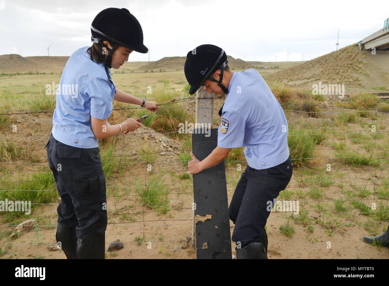 (180608) -- XILINHOT, June 8, 2018 (Xinhua) -- Mounted police repair broken safety net while patrolling along railroad in Xilinhot, north China's Inner Mongolia Autonomous Region, June 7, 2018. In order to keep railroads in operation, mounted police in Xilinhot are busy repairing broken safety net and checking livestock intrusion while patrolling along railroads. (Xinhua/Zou Yu) (wyl) - Stock Image