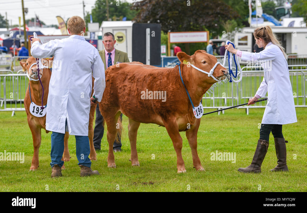 Ardingly Sussex UK 8th June 2018 - Cattle judging at the South of England Show in beautiful sunny weather held at the Ardingly Showground near Haywards Heath Sussex Credit: Simon Dack/Alamy Live News Stock Photo