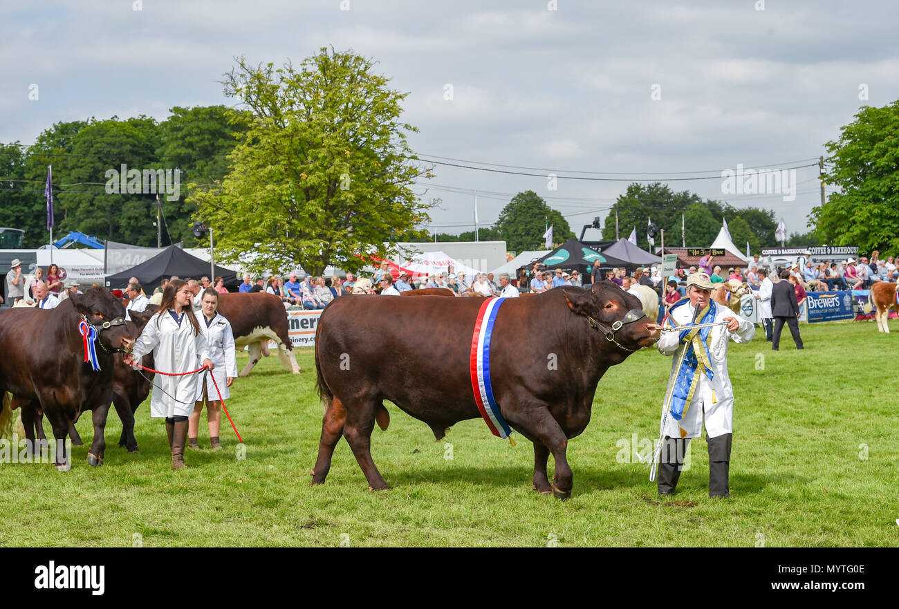 Ardingly Sussex UK 8th June 2018 - The Parade of Cattle at the South of England Show in beautiful sunny weather held at the Ardingly Showground near Haywards Heath Sussex Photograph by Simon Dack Credit: Simon Dack/Alamy Live News - Stock Image