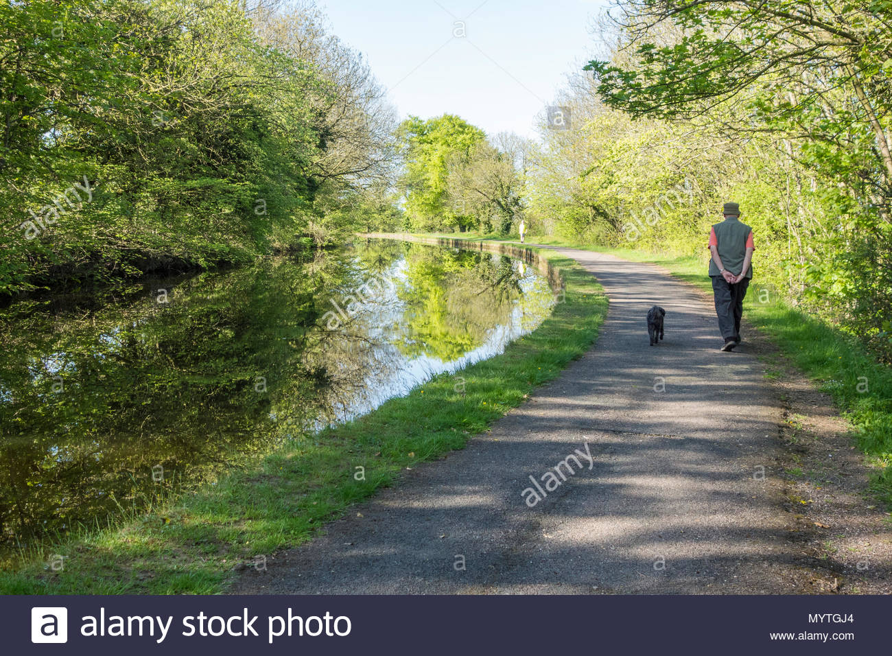 A walker on the towpath of the Lancaster Canal, near to Bolton le Sands - Stock Image