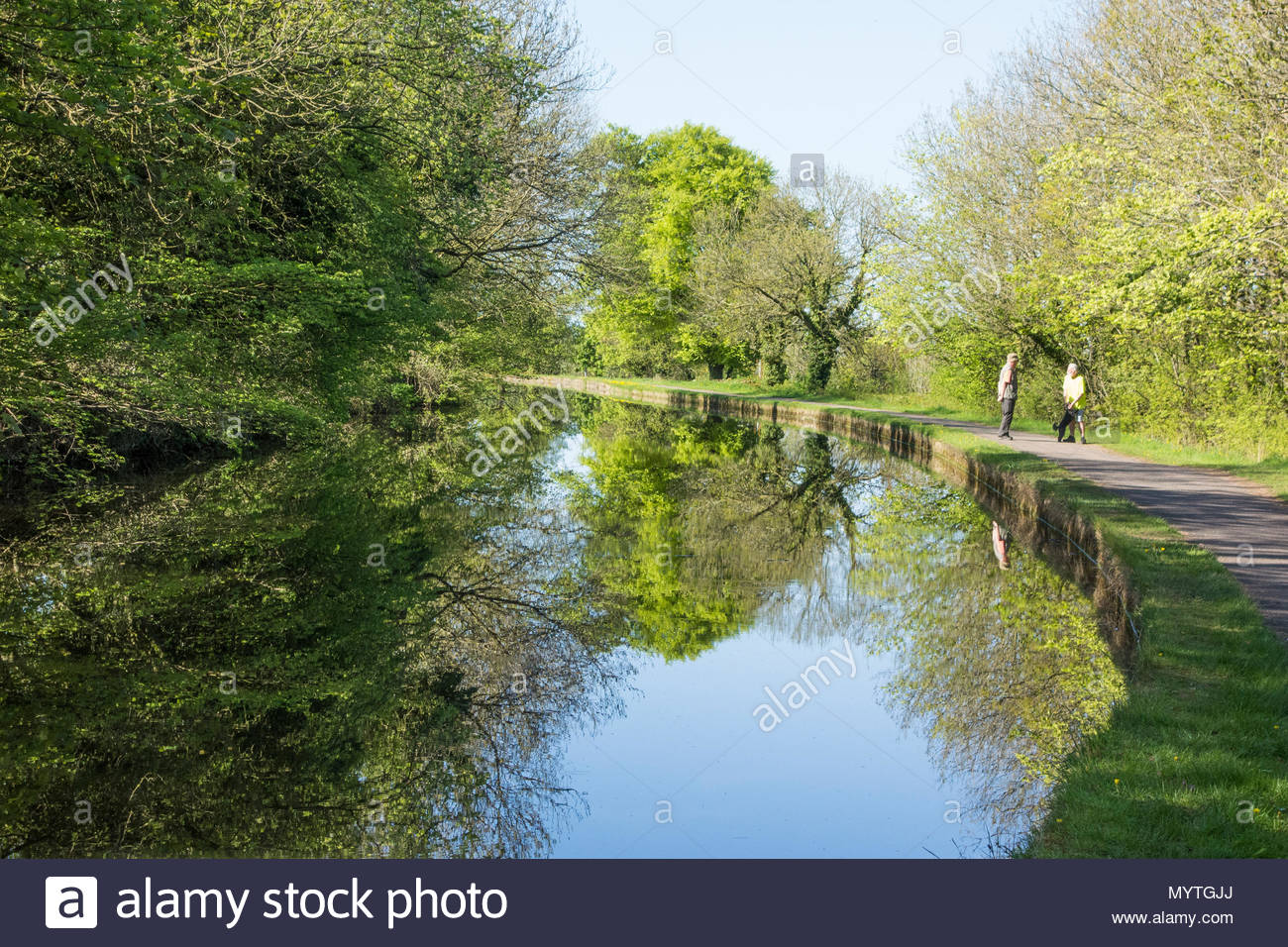 Walkers on the towpath of the Lancaster Canal, near to Bolton le Sands with the reflection of the trees - Stock Image