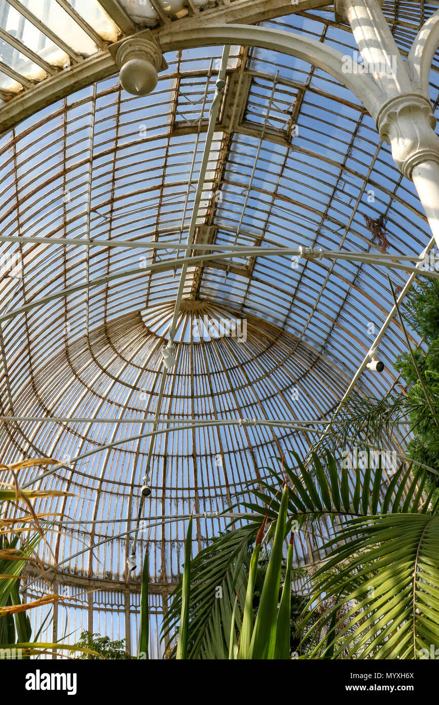 The cast-iron columns and glass roof of a Victorian Palm House at Botanic Gardens Northern Ireland. - Stock Image