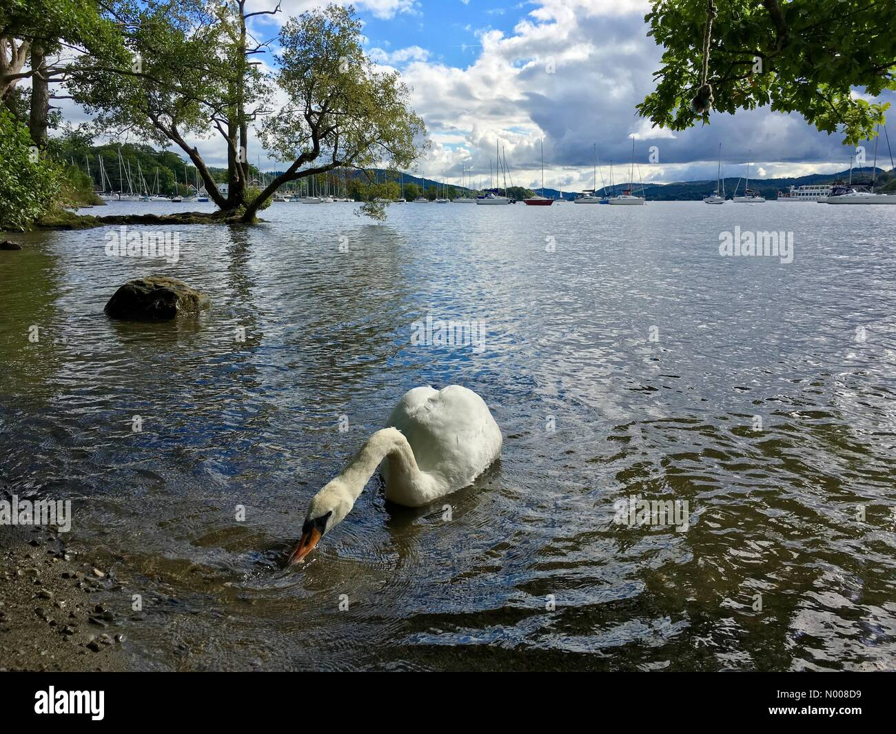 UK Weather: Sunny afternoon at Bowness on Lake Windermere. - Stock Image