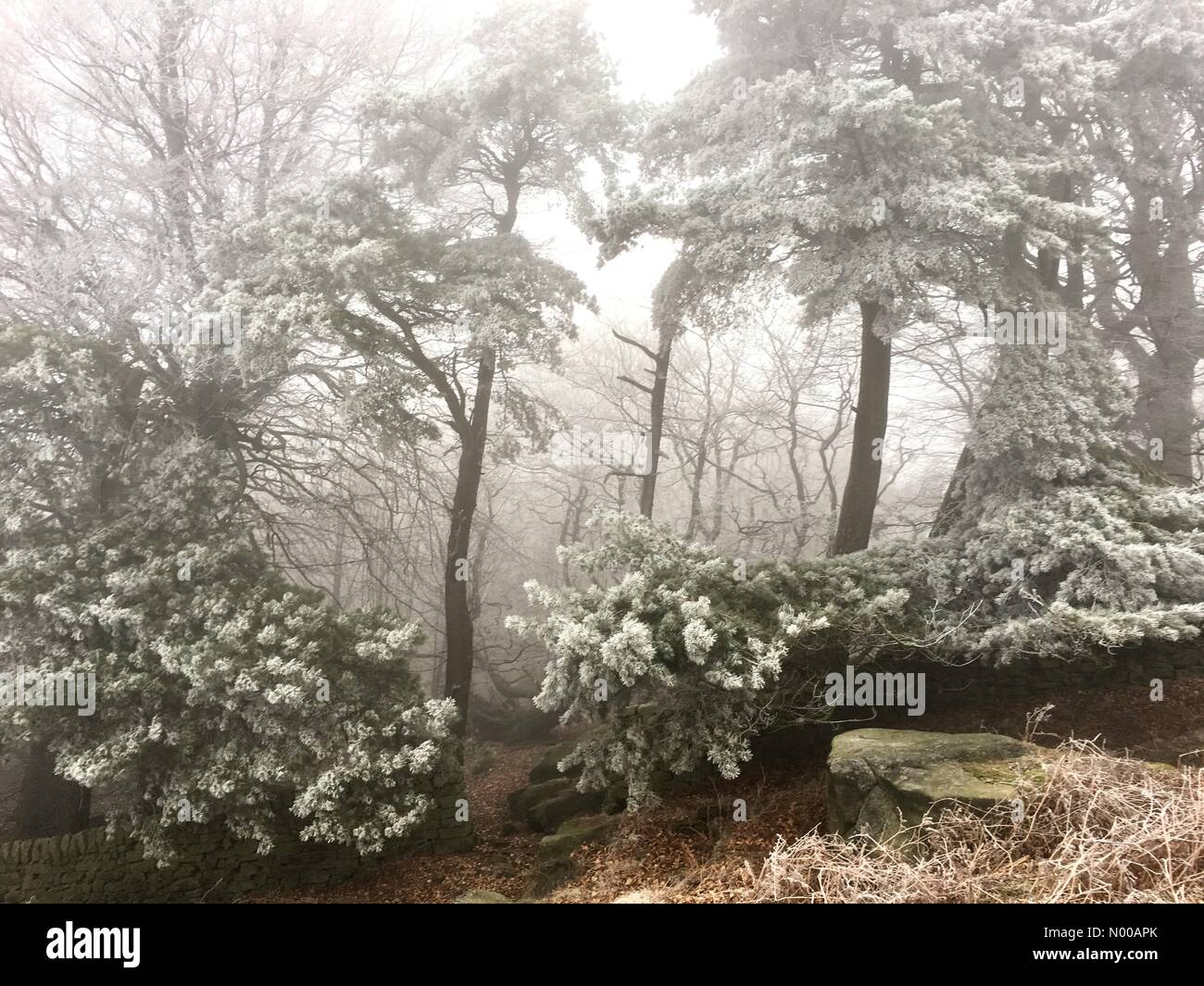 Hope Valley, Peak District, UK. 27th Jan, 2017. Hoar frost at Stanage Plantation, Peak District, UK. Freezing fog Stock Photo