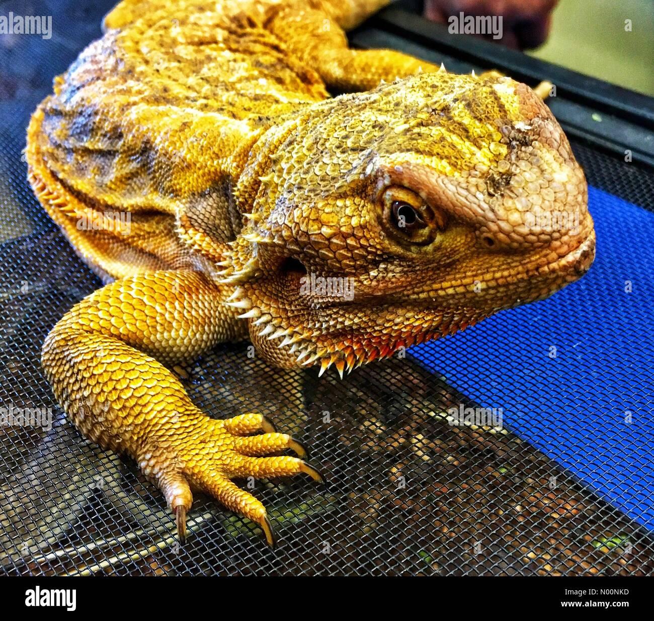 Wauwatosa, USA  28 April 2018  RETC Reptile Meet and Greet