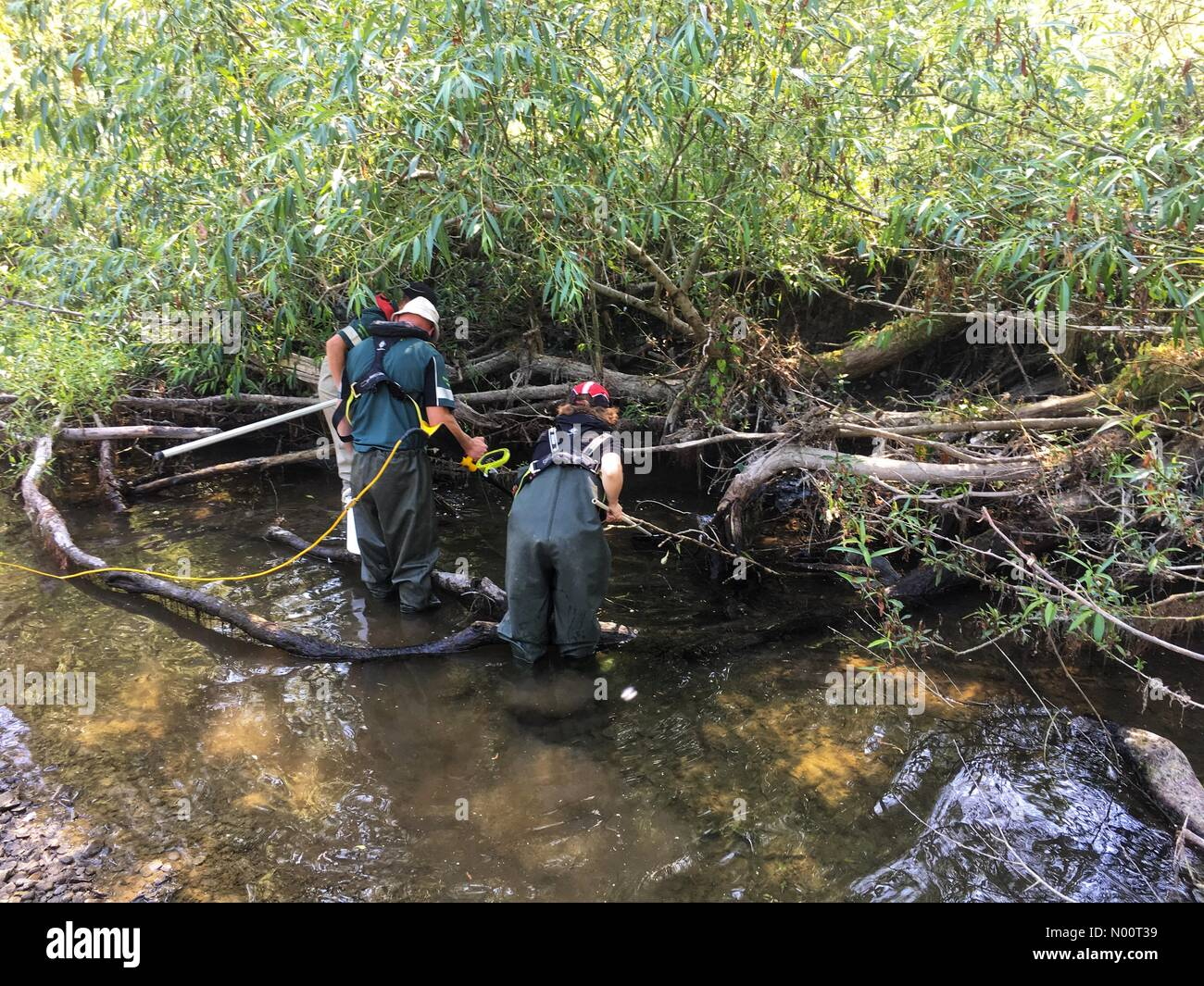 UK Weather- Fish rescue River Teme Herefordshire