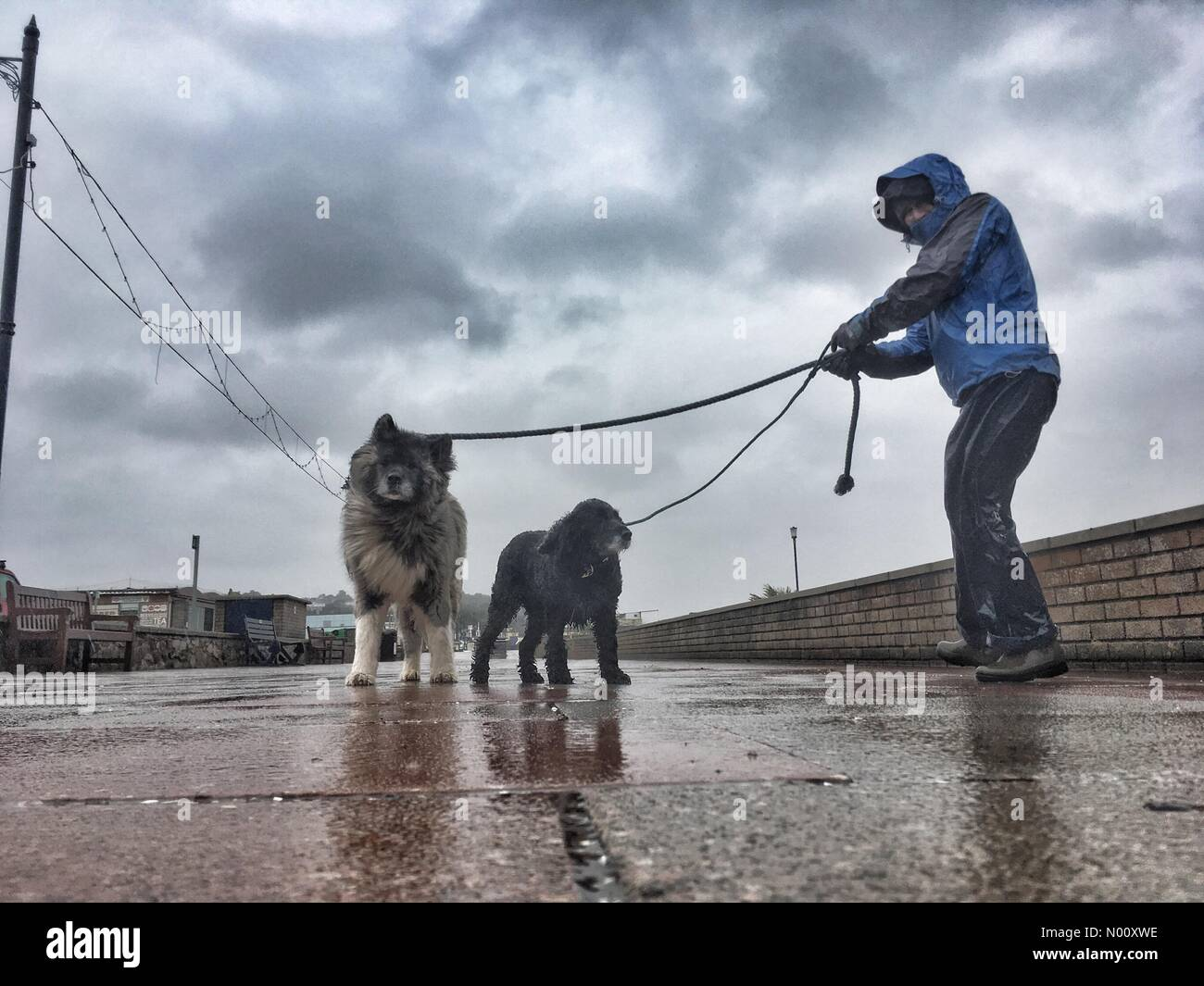 Teignmouth, Devon. 12th Oct 2018. UK Weather: Storm Callum. Wet and windy for dog walkers at Teignmouth Credit: nidpor/StockimoNews/Alamy Live News - Stock Image