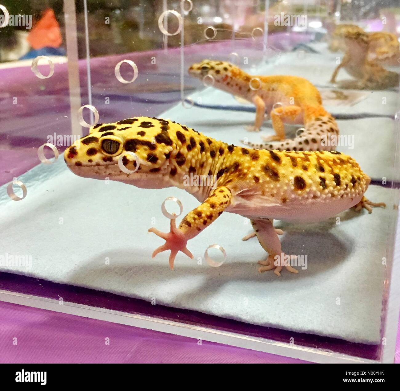 Pet Expo Stock Photos & Pet Expo Stock Images - Page 3 - Alamy