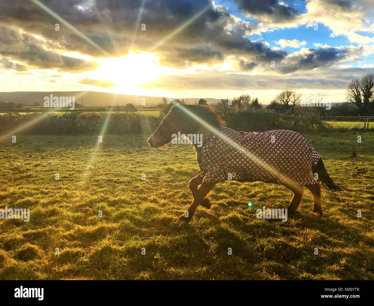 Ripe, East Sussex, UK. 9th December 2018. UK Weather. Pony enjoying the last of the sunshine near the South Downs National Park in East Sussex. © Peter Cripps/Stockimo Live News Credit: Peter Cripps/StockimoNews/Alamy Live News - Stock Image