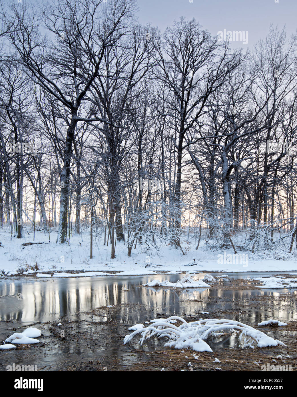 Willoway Brook winds its way thought a winter twilight landscape at The Morton Arboretum in Lisle, Illinois. - Stock Image