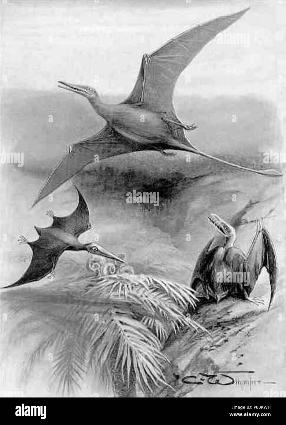 . English: Rhamphorhynchus above, with Pterodactylus and Scaphognathus below (from Nebula to Man, 1905, England)  . 1905. Charles Whymper (1853-1941) 87 Ramphorhynchus - Stock Image