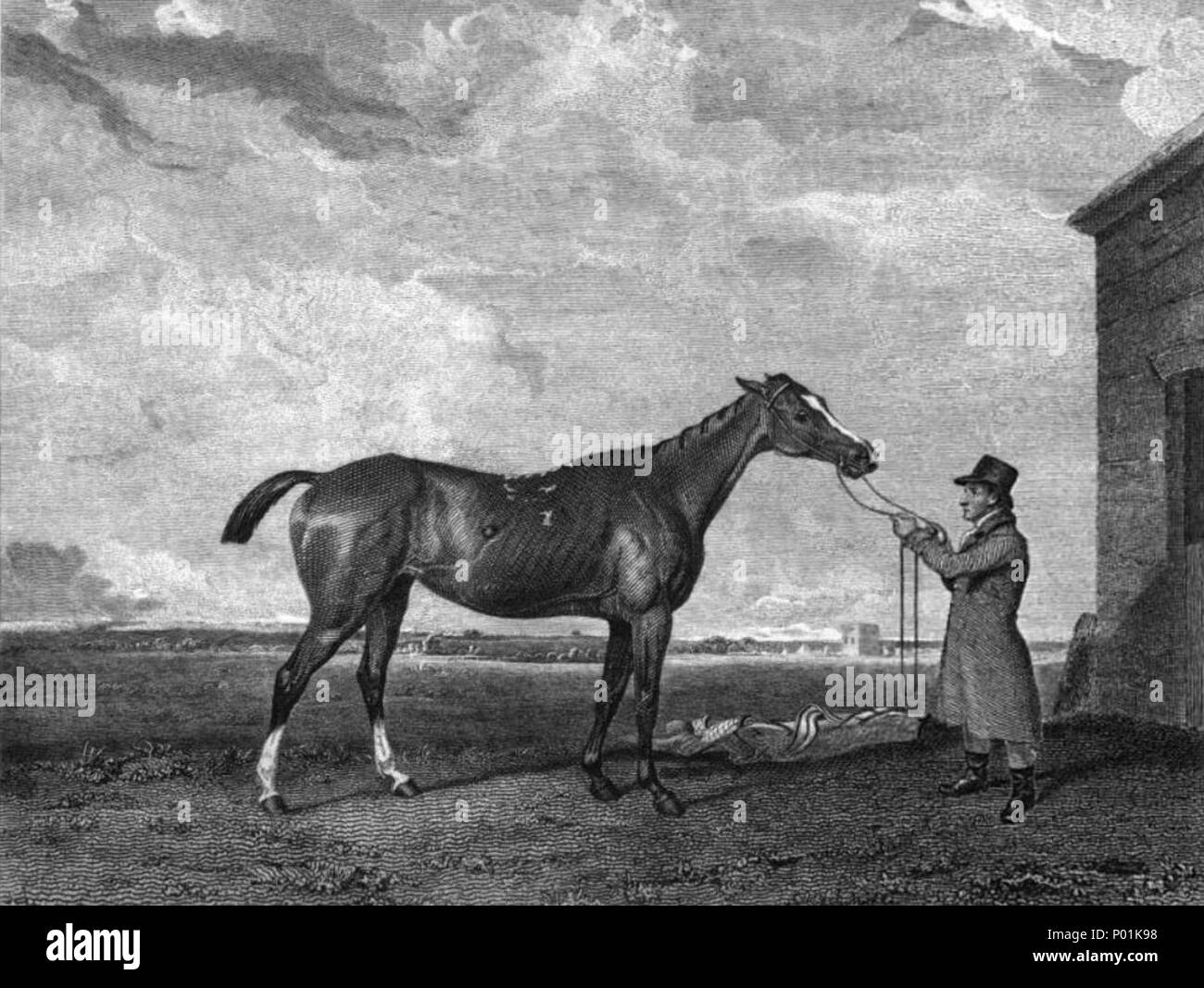 . English: Rhoda, Thoroughbred racehorse and winner of 1816 1000 Guineas.  . 1821. Engraved by W. Smith from a painting by A. Cooper. The death dates of the artists are unknown but are presumed to have occurred before 1912. 20 Rhoda (horse) - Stock Image