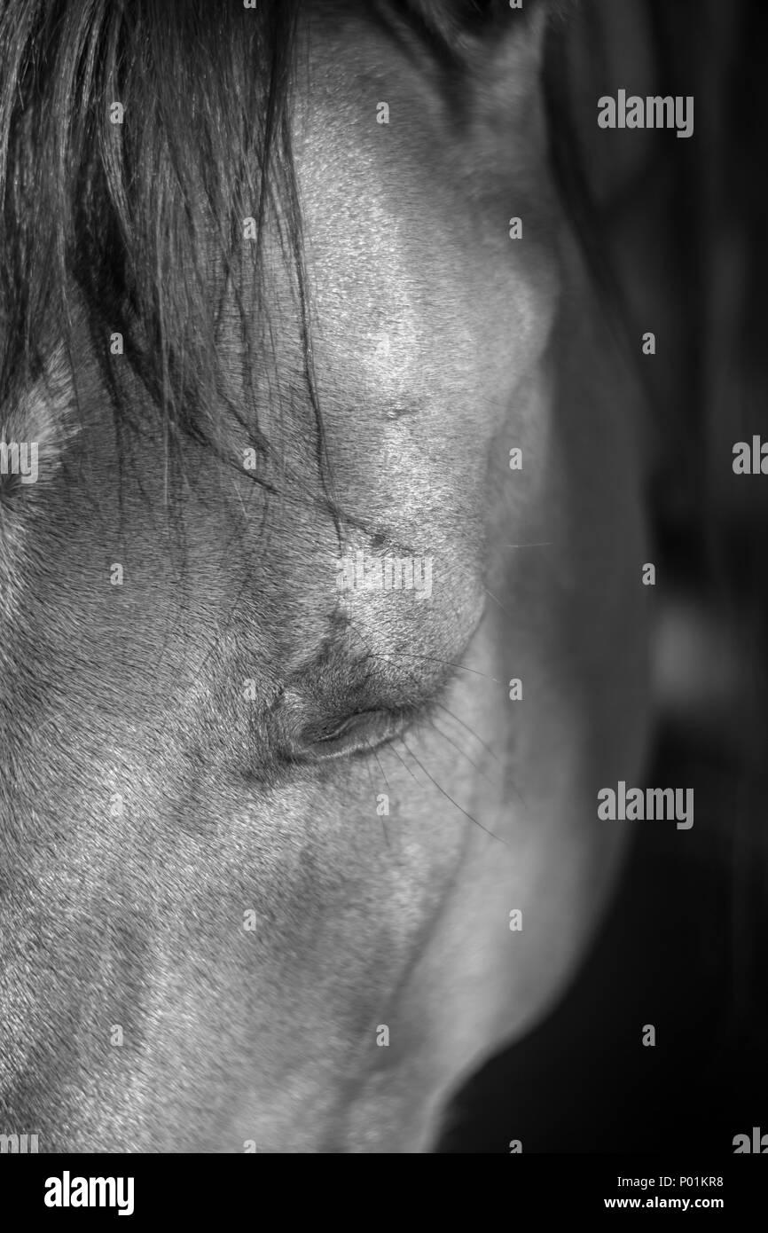 Horse Close Up- Israel Horse Close Up- Israel - Stock Image