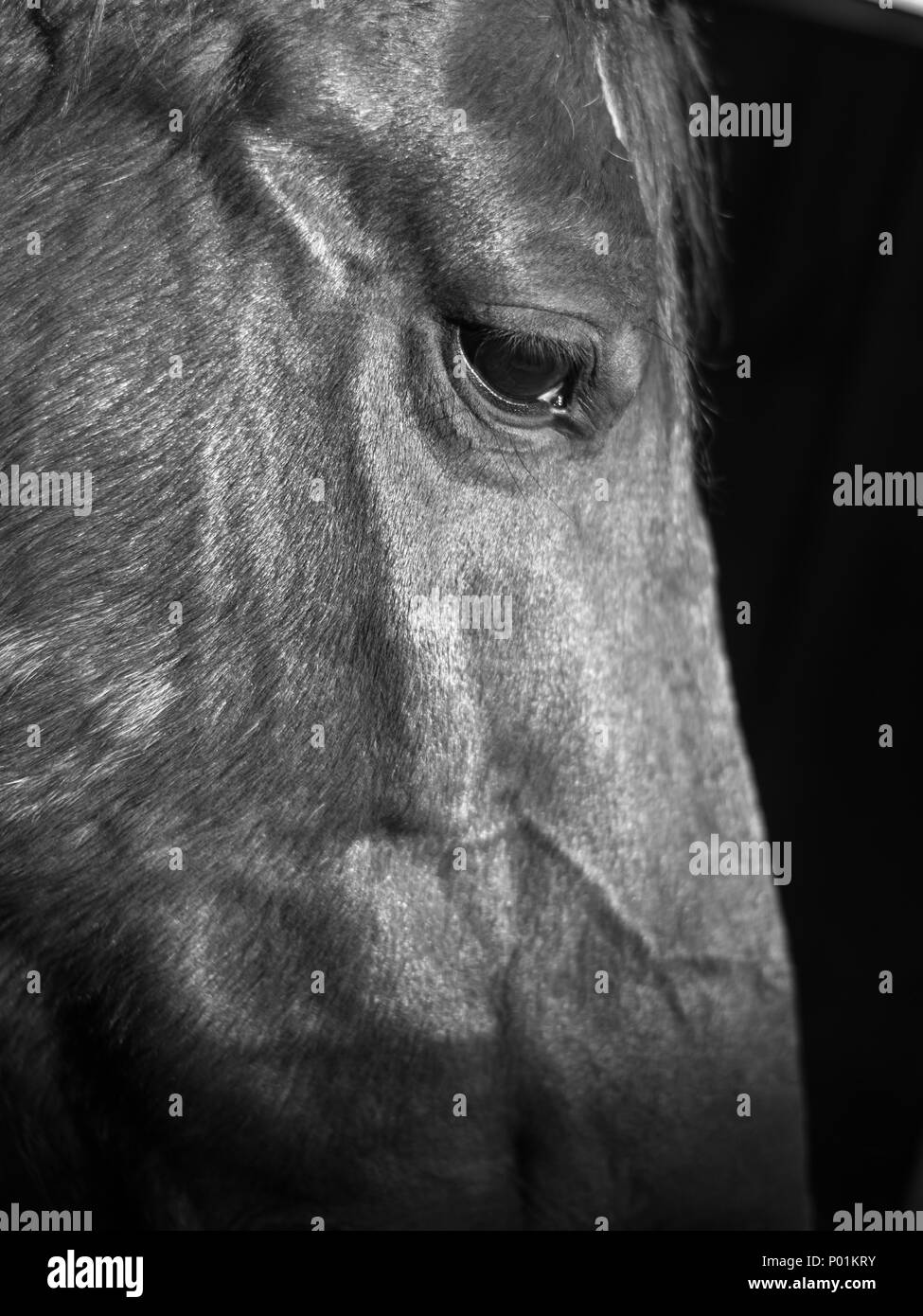 Horse Close Up- Israel Horse Close Up- Israel Stock Photo