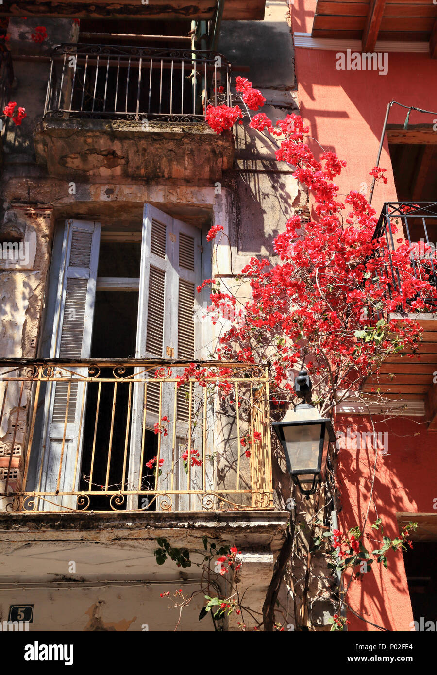 Red bougainvillea spectabilis flowers on the facade of an old house in Nafplio, Greece - Stock Image