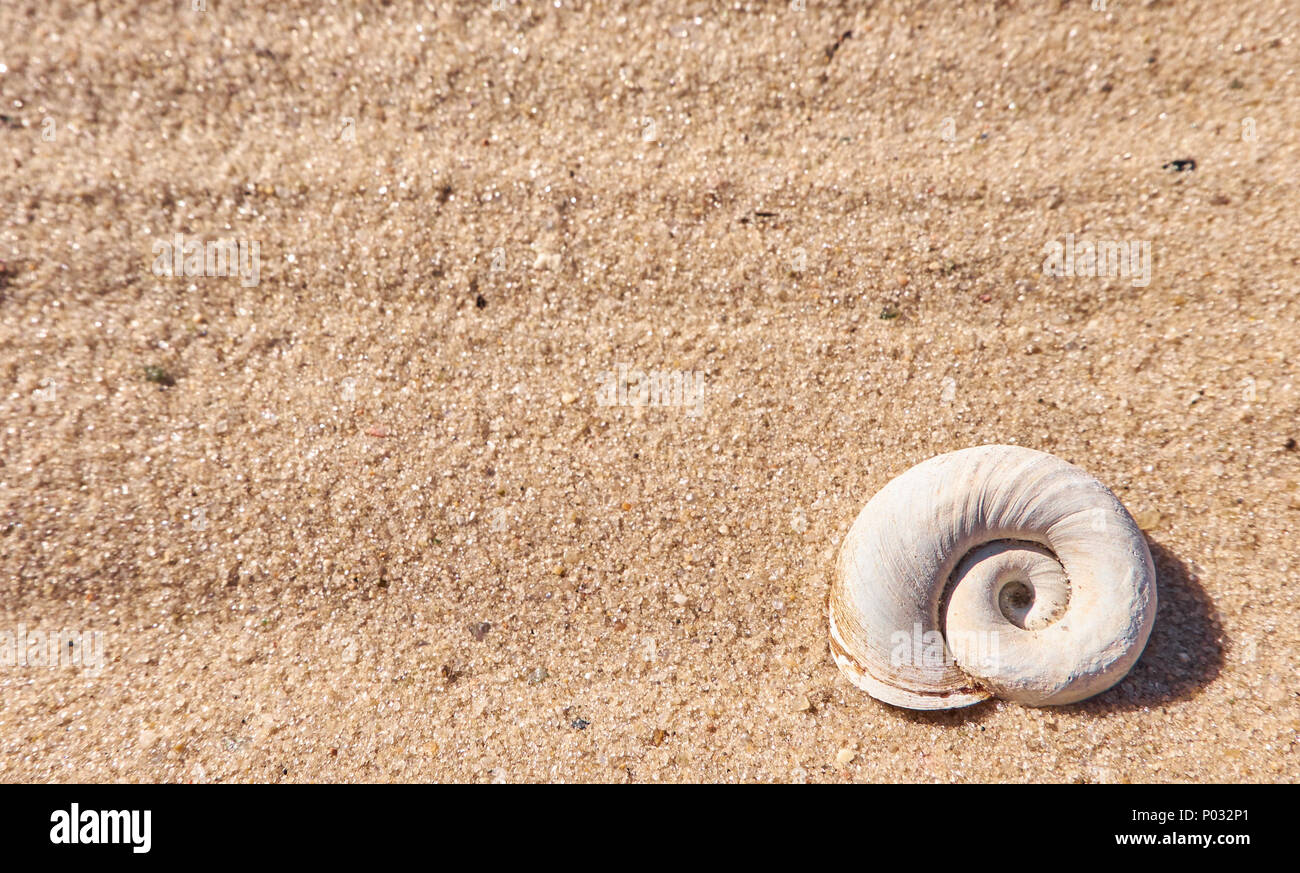 Seashell on a beach sand. Summer background with an empty textspace - Stock Image